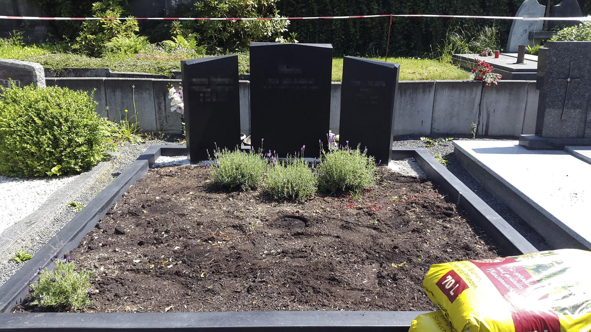 Grabbepflanzung pflege gartengestaltung saliger for Gartengestaltung app