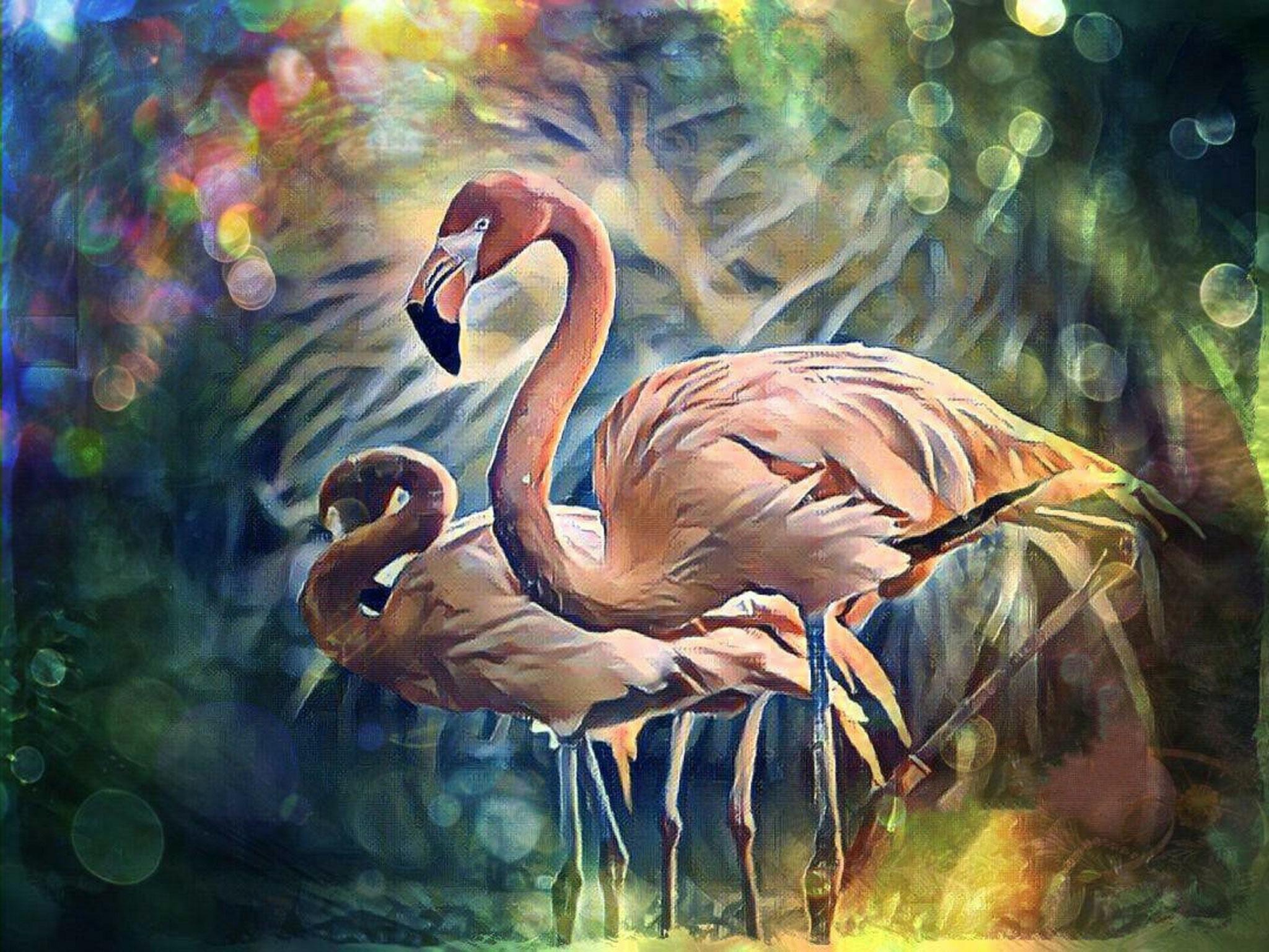 Animal Print Flamingos - Kunstdruck auf Leinwand