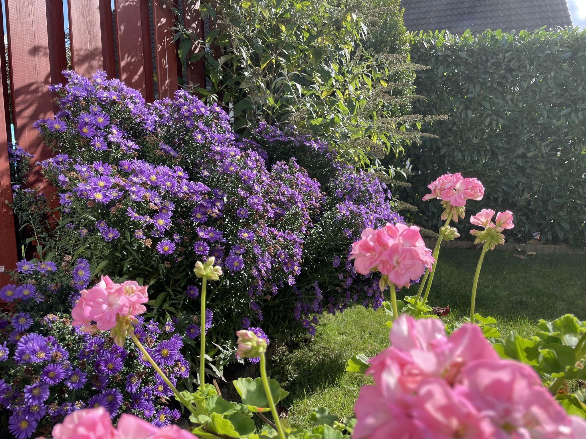 Impressionen im Garten