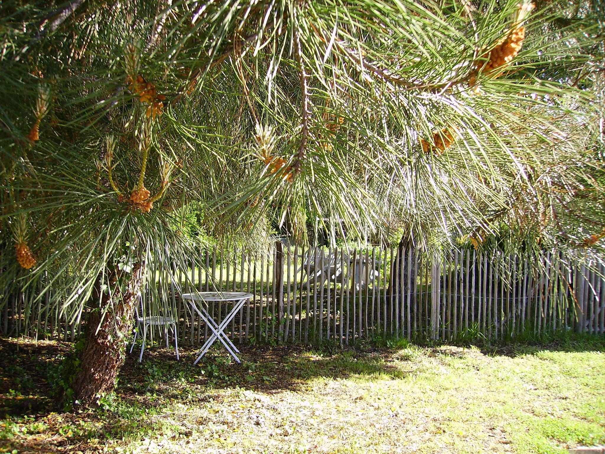 jardin arrière de maison