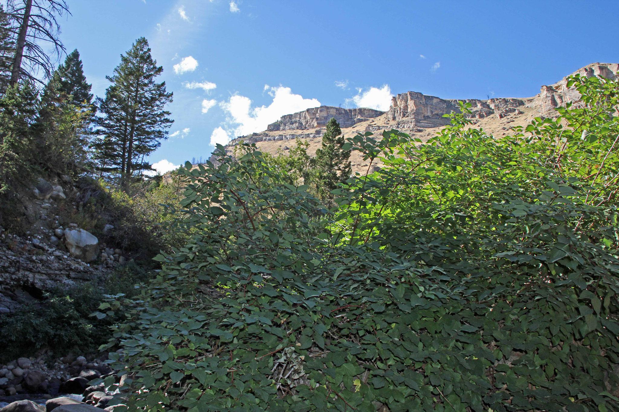 Bild 18 Am Sinks Canyon, wo das Flüßchen in einer Höhle verschwindet