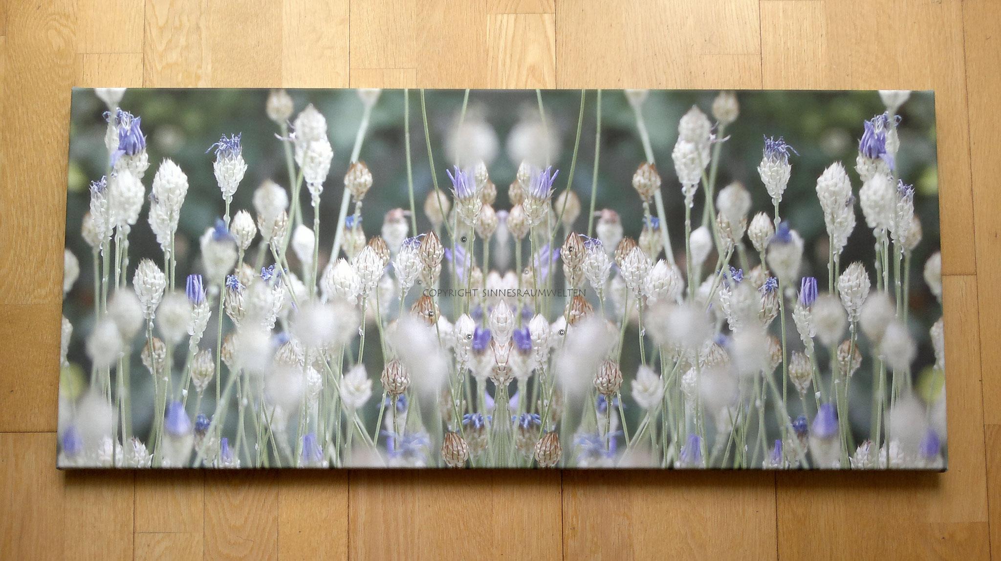 zauberhafte wiesenblumen
