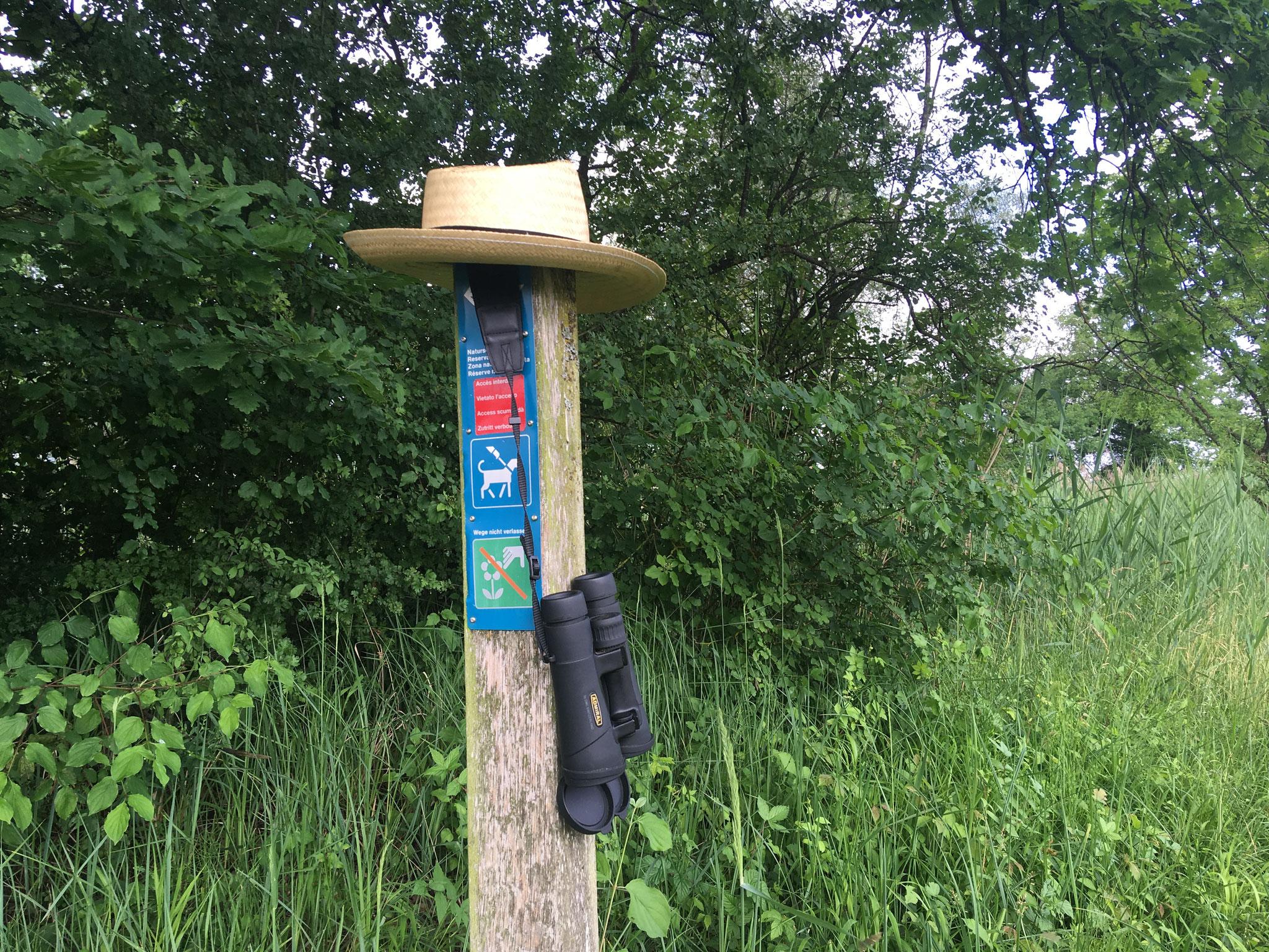 «50 Vögel» Exkursion Stille Reuss, Juni 2018