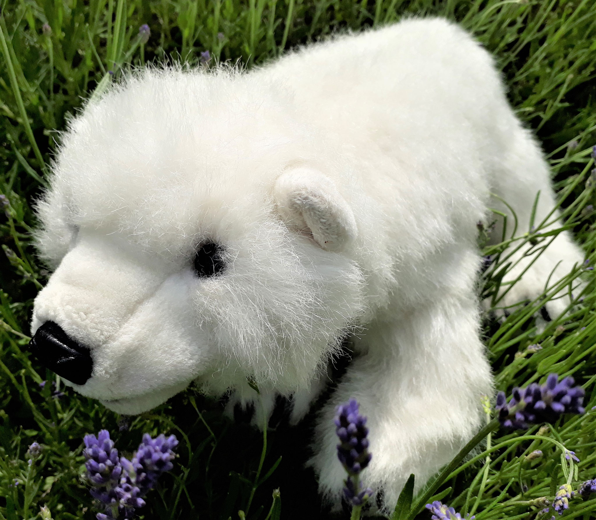 Klasse 1a - Klassenlehrerin Frau Münch - Klassentier Ole, der Eisbär