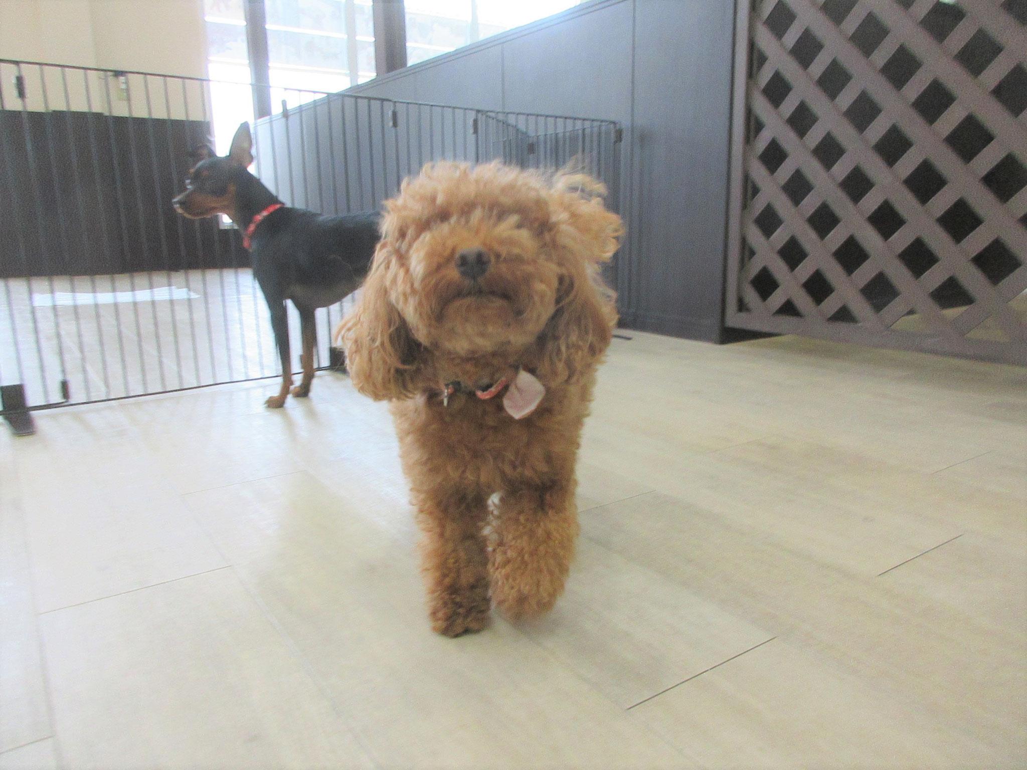 ナナちゃん・犬の保育園Baby・犬・犬のしつけ・犬の社会化・習志野市・八千代市・船橋