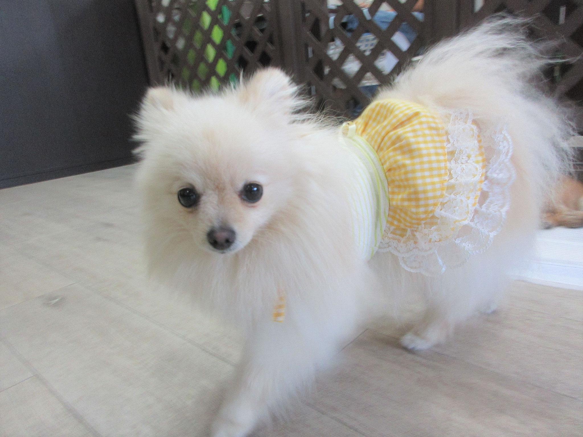 リンちゃん・犬の保育園Baby・犬・犬のしつけ・犬の社会化・習志野市・八千代市・船橋