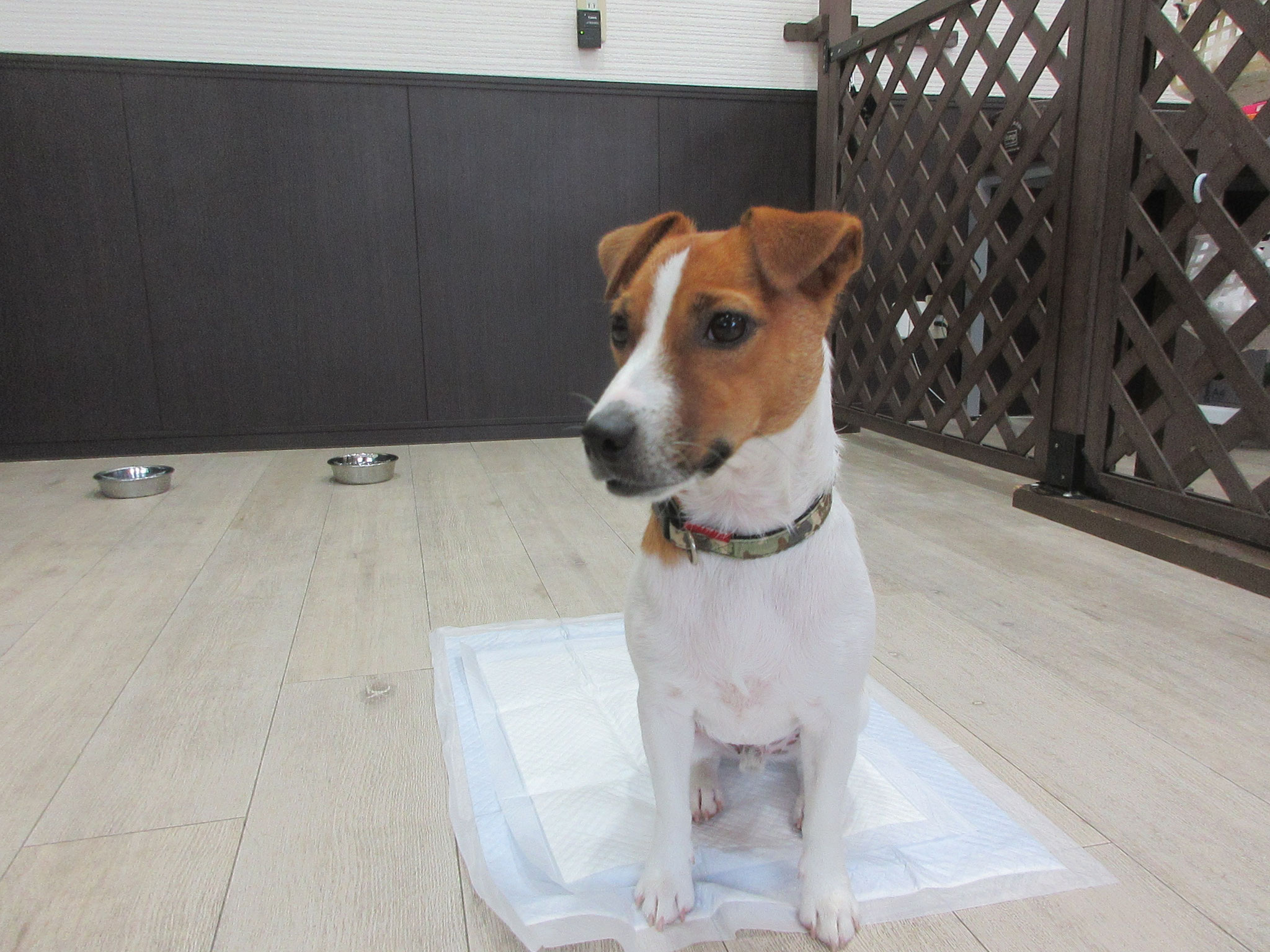ボブくん・犬の保育園Baby・犬・犬のしつけ・犬の社会化・習志野市・八千代市・船橋市