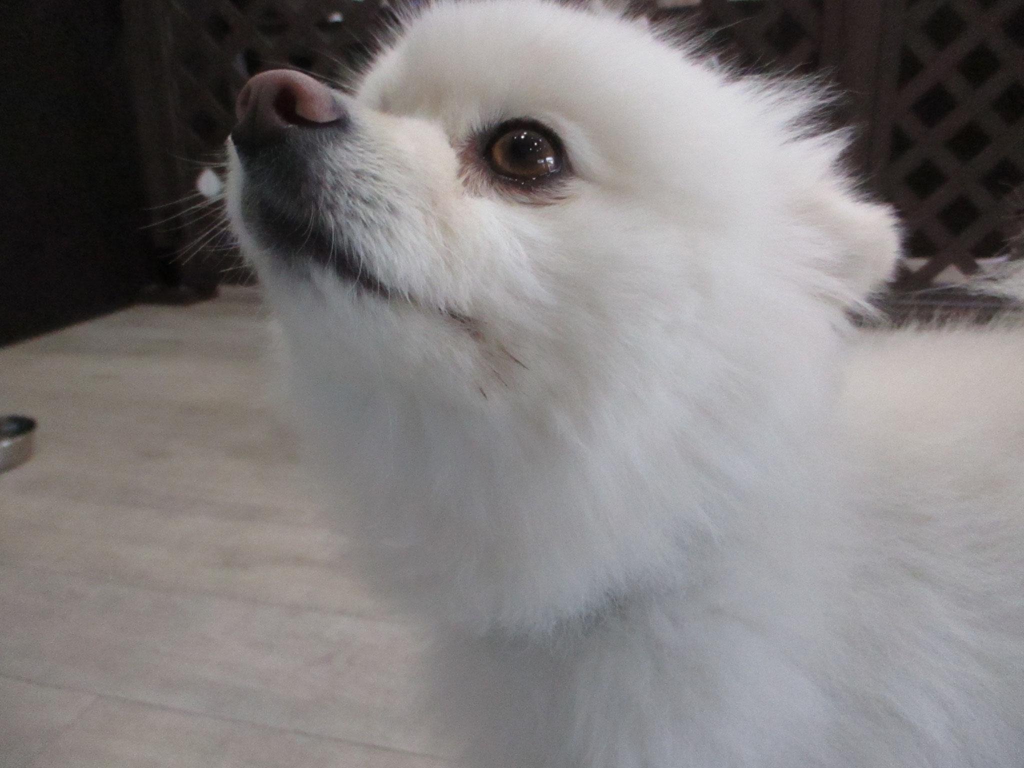 犬の保育園Baby・犬・ペットホテル