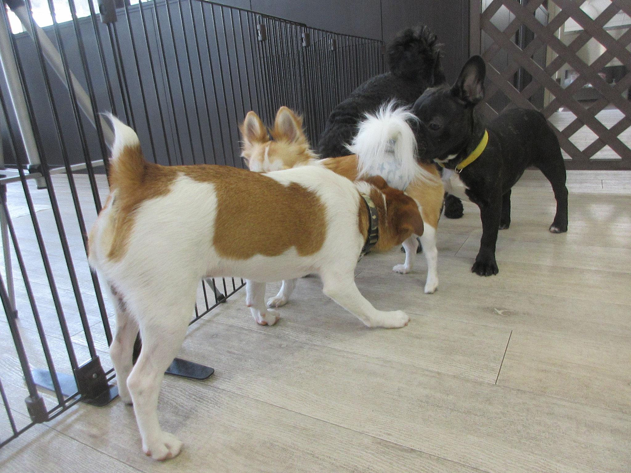 犬の保育園Baby・犬・犬のしつけ・犬の社会化・お預り・習志野市・八千代市・船橋市