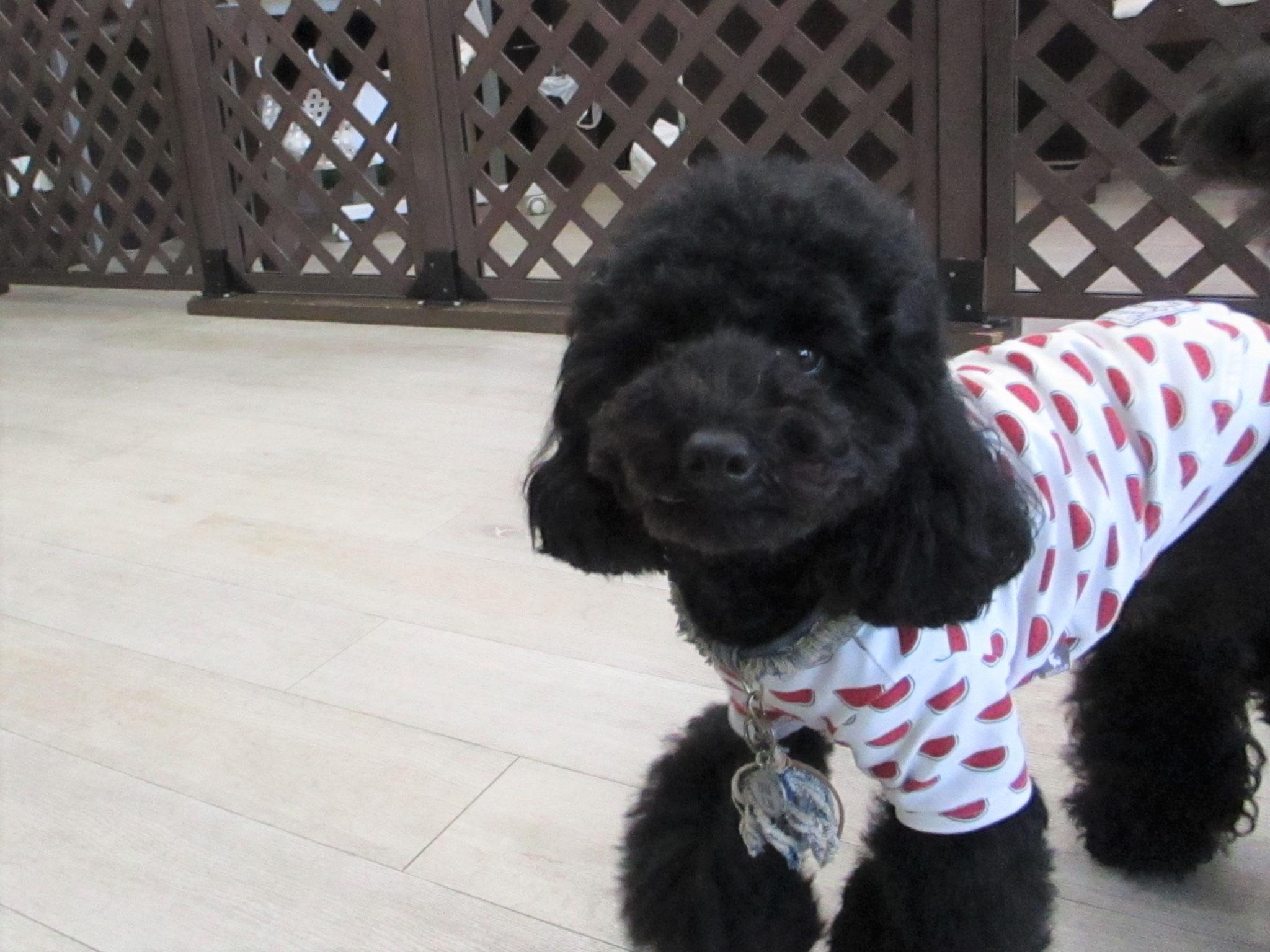 ピリアロハくん・犬の保育園Baby・犬・犬のしつけ・犬の社会化・習志野市・八千代市・船橋市