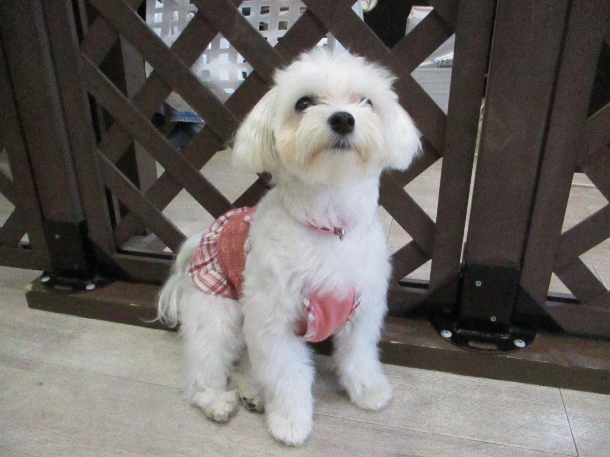 キキちゃん・犬の保育園Baby・犬・犬のしつけ・犬の社会化・習志野市・八千代市・船橋市