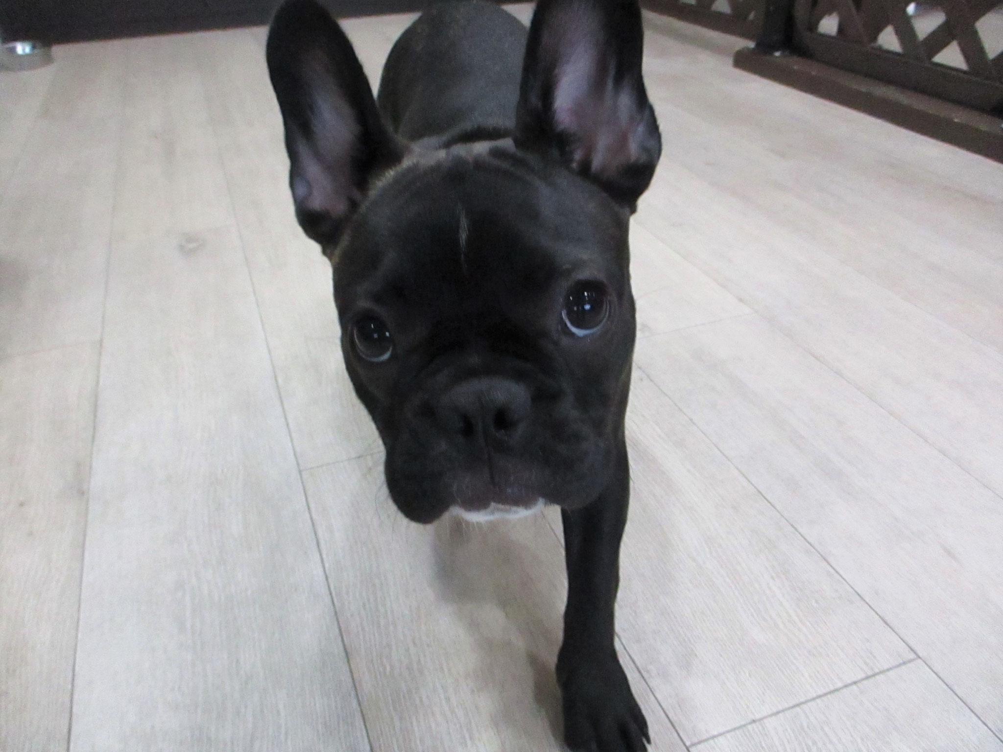 ぽんずちゃん・犬の保育園Baby・犬・犬のしつけ・犬の社会化・習志野市・八千代市・船橋市