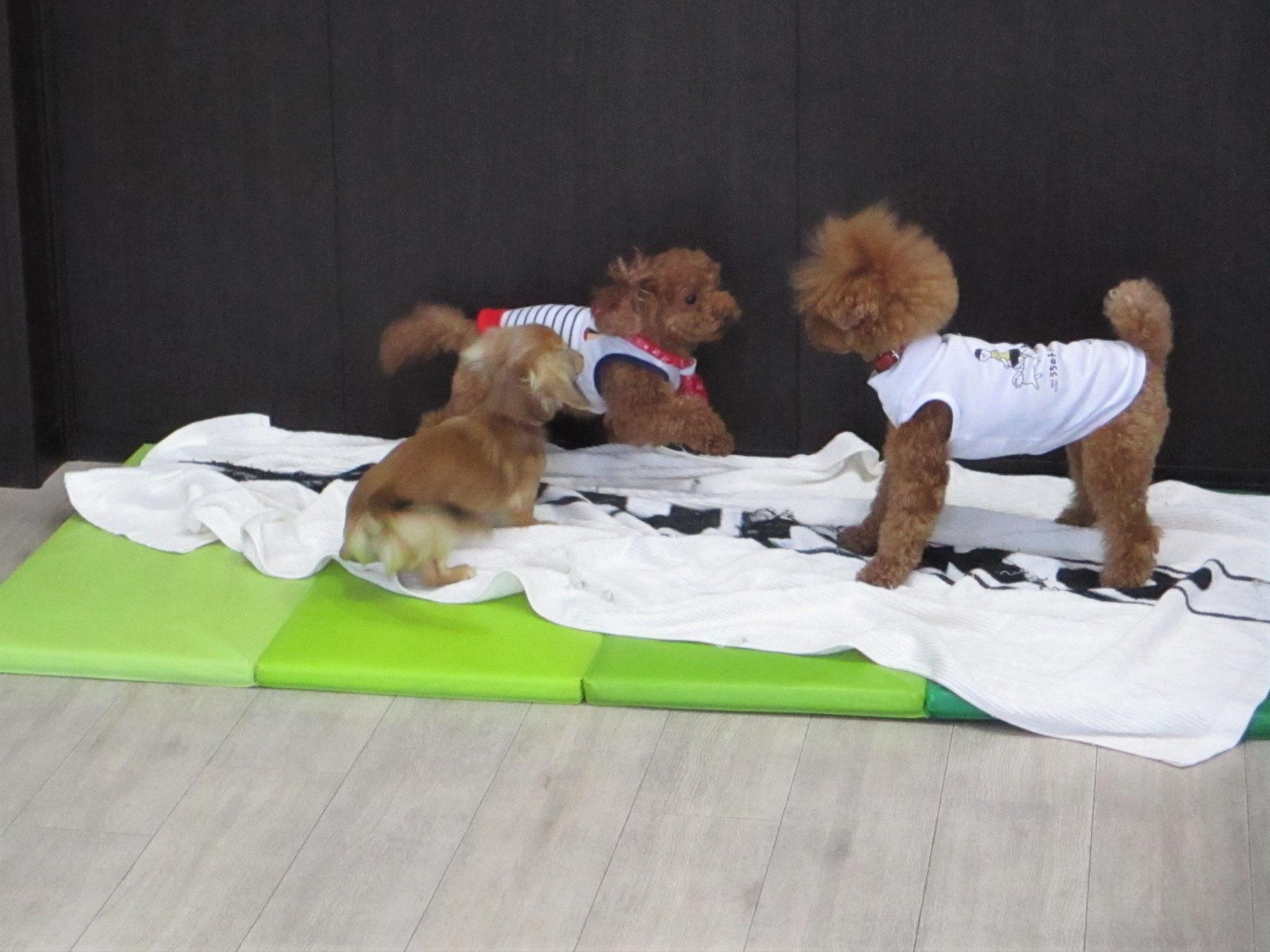 犬の保育園Baby・犬・犬のしつけ・犬の社会化・3人の遊び