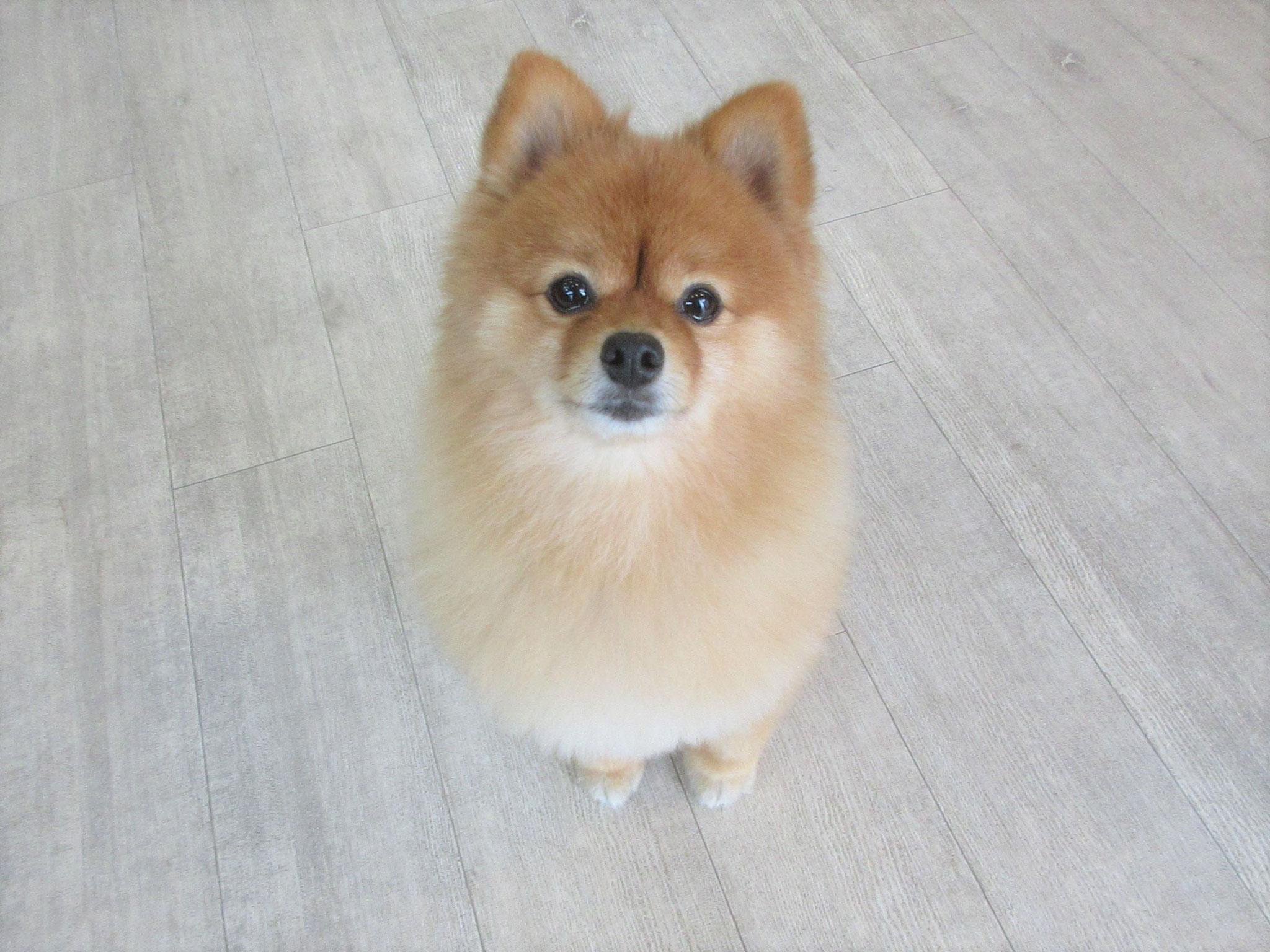 ラッキーくん・犬の保育園Baby・犬・犬のしつけ・犬の社会化・習志野市・八千代市・船橋市