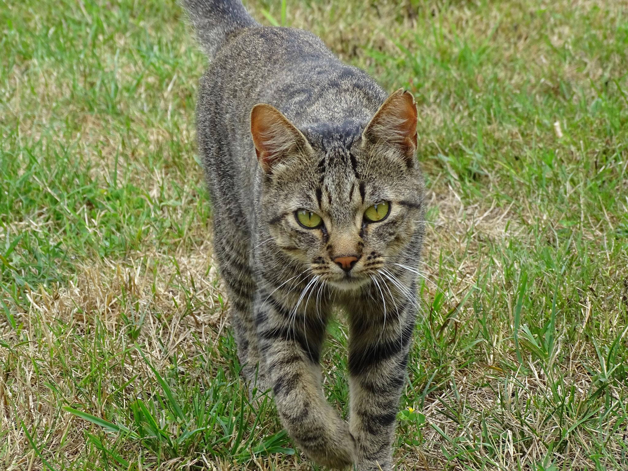 Le chat chasse les souris