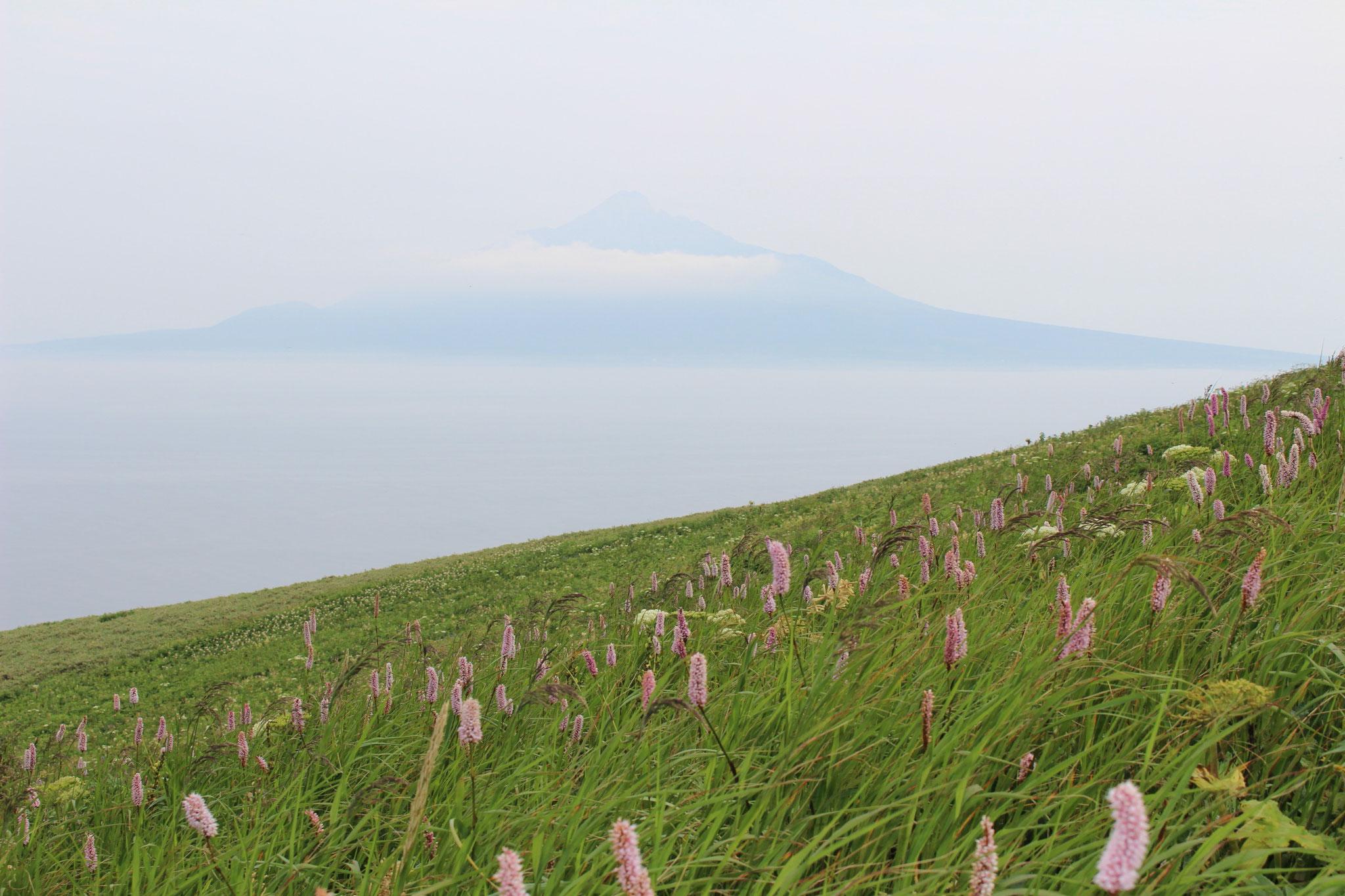 礼文島山岳コースから利尻富士が見えます。