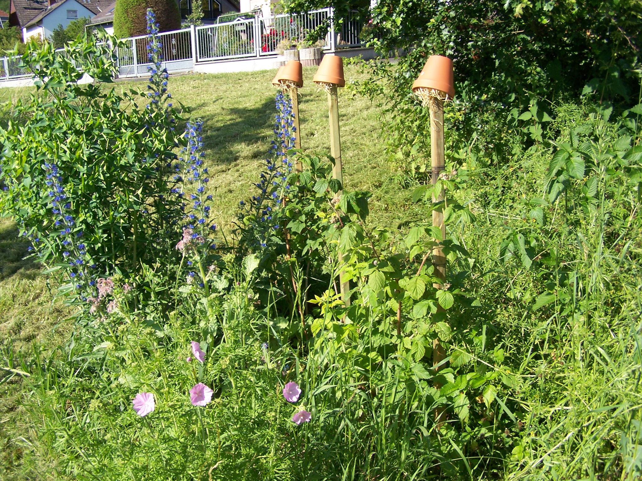 Himbeeren und Wildblumen
