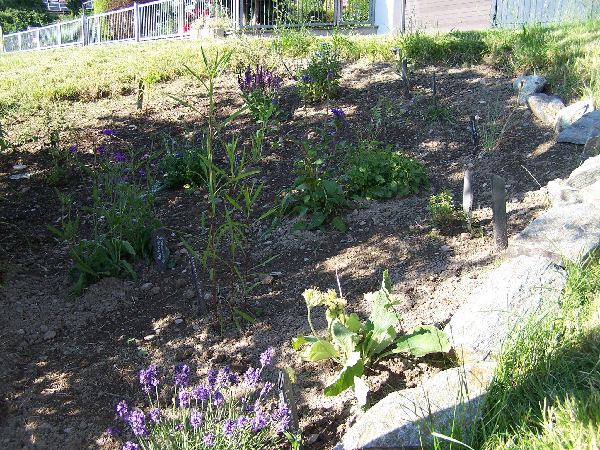 ... das Schmetterlingsbeet wurde bepflanzt und die Blumen mit Namensschildern versehen...