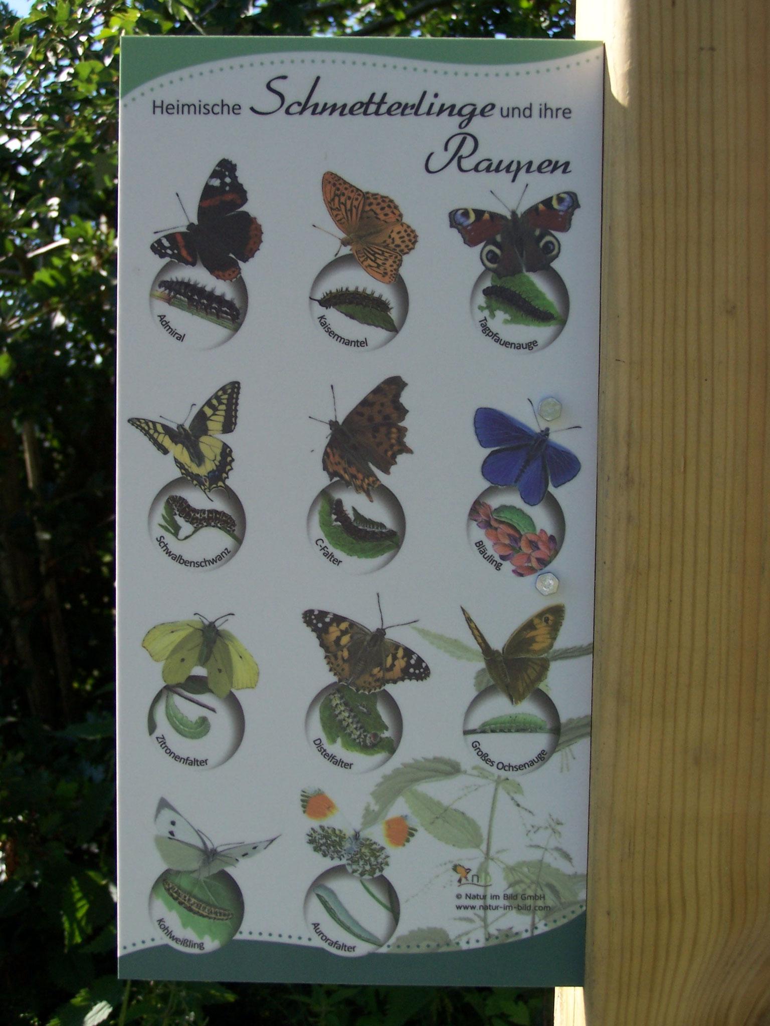 """... Infotafel am """"Schmetterlingsbeet"""" ..."""
