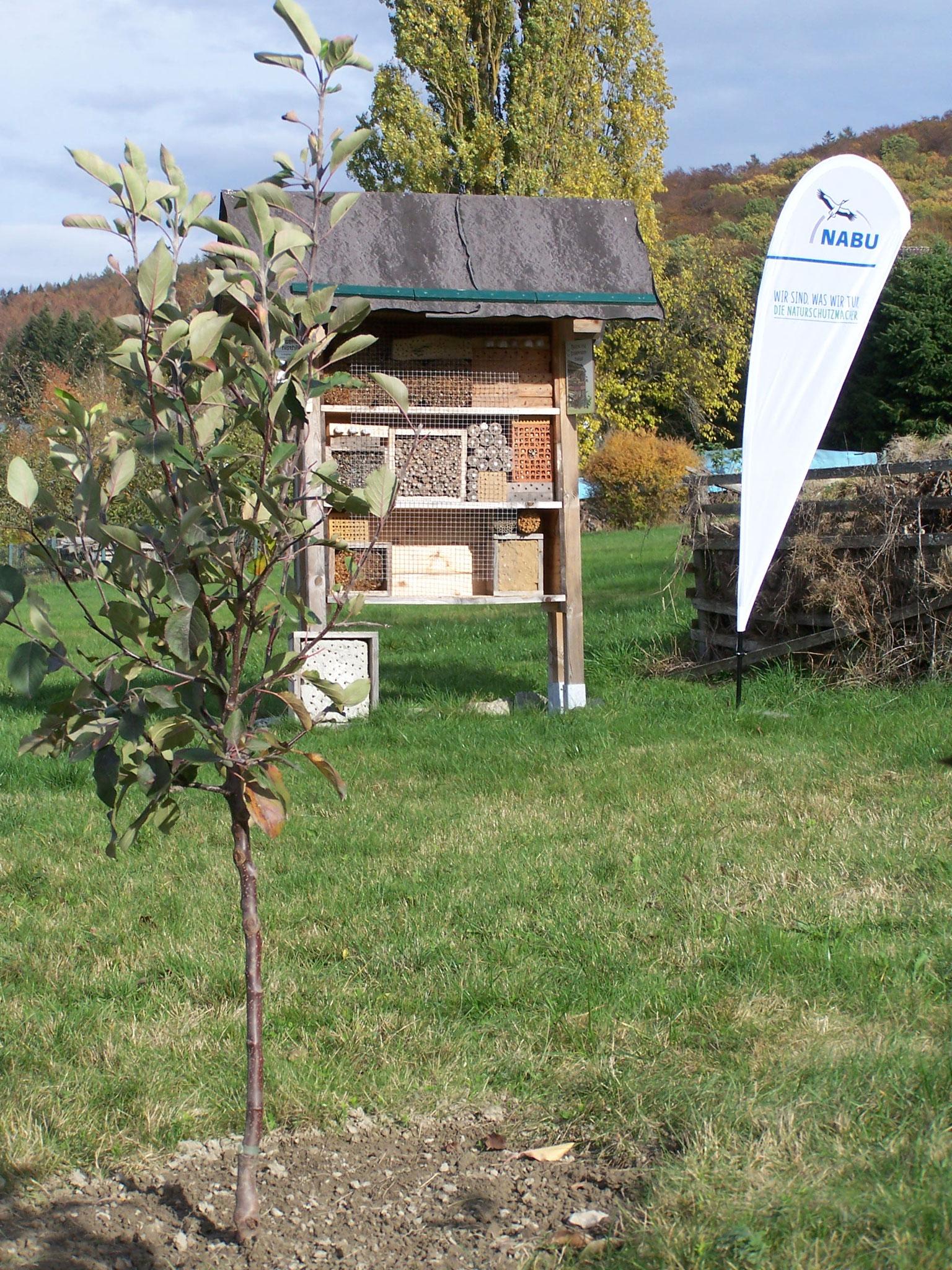 Wir haben 4 Apfelbäume (Halbstämme) in unserem Schaugarten gepflanzt 9.2020