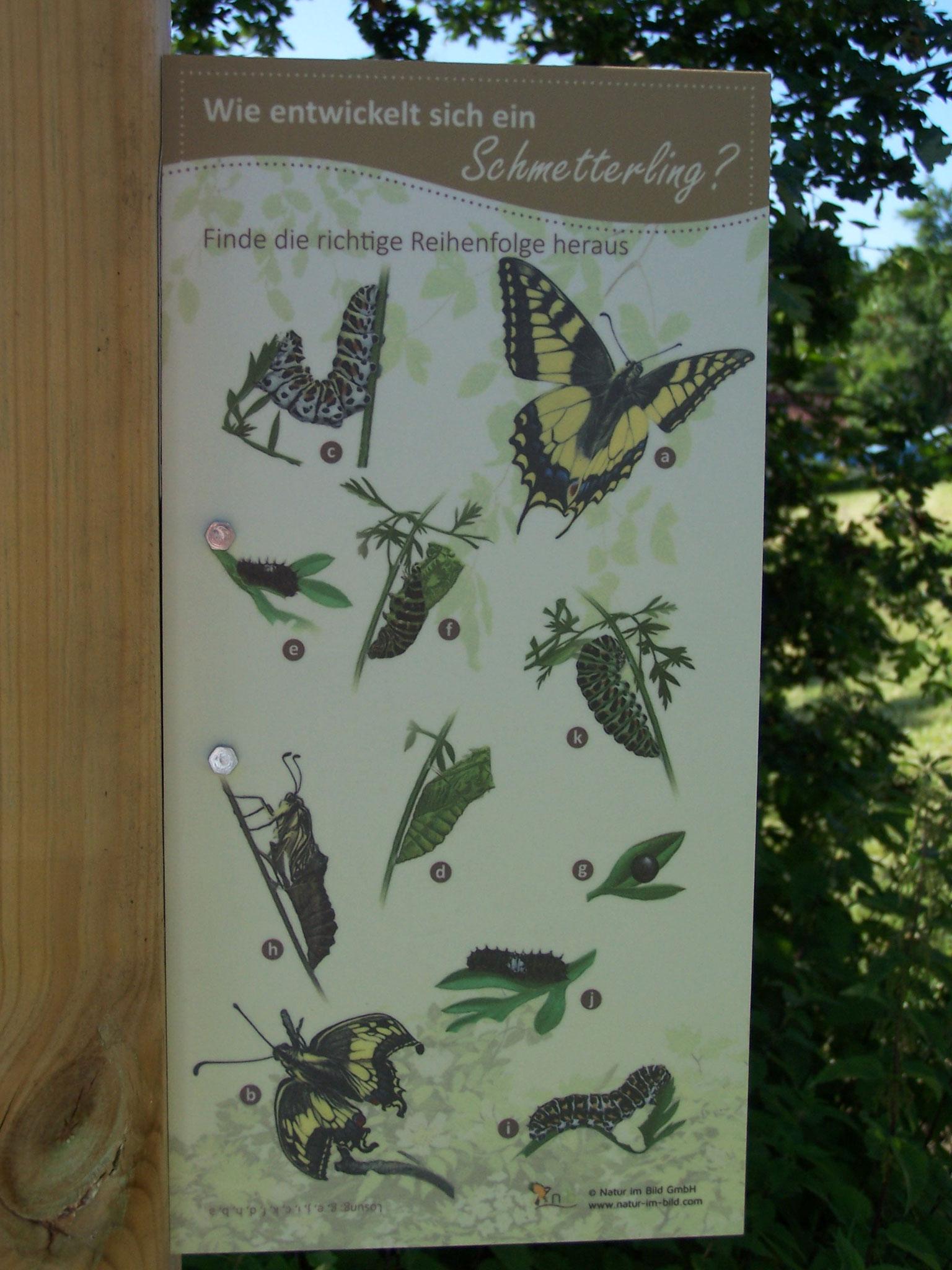 ... Infoafel am Schmetterlingsbeet ...