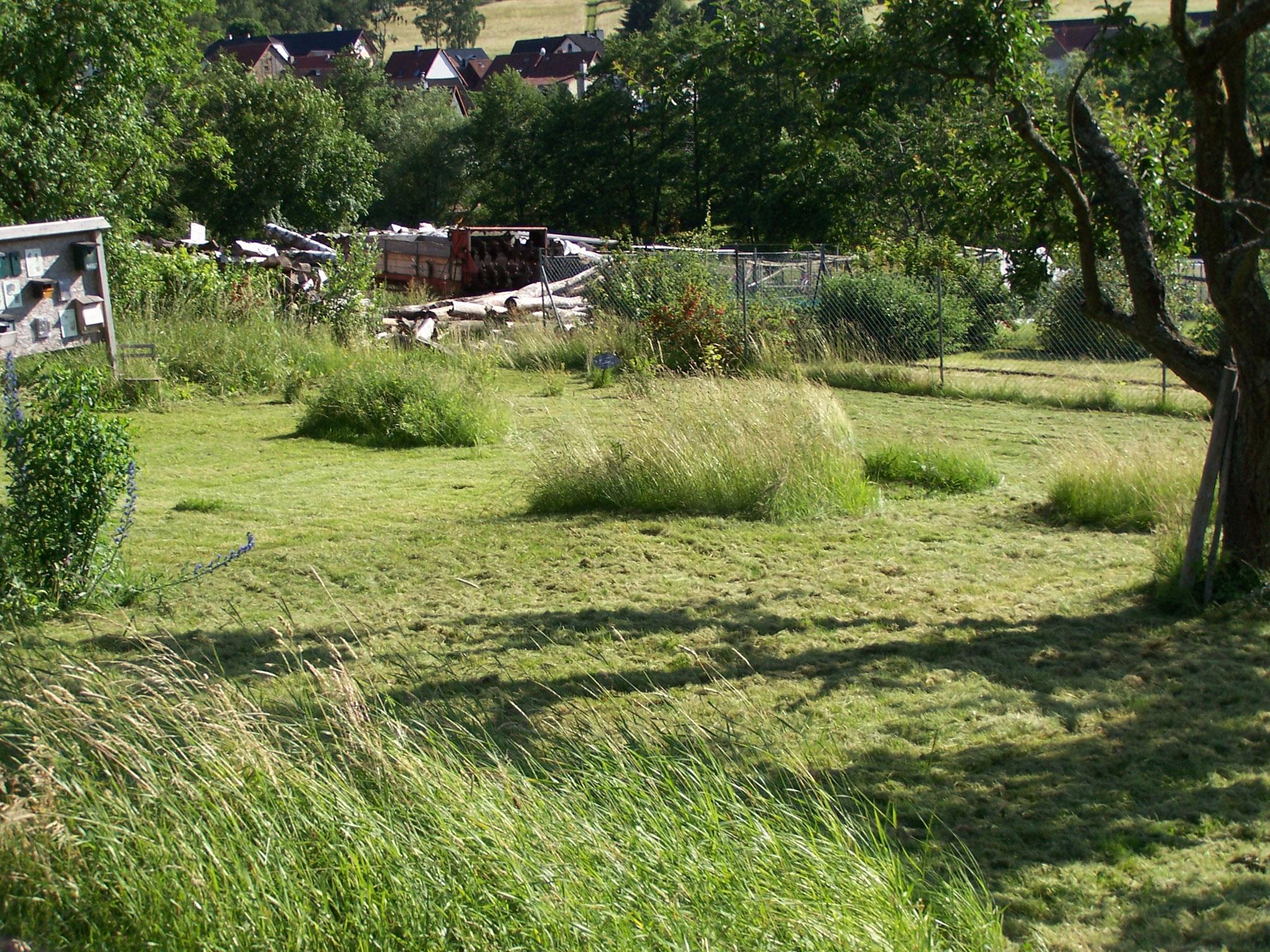 ... im Schaugarten lassen wir Inseln stehen, die erst später im Jahr gemäht werden....