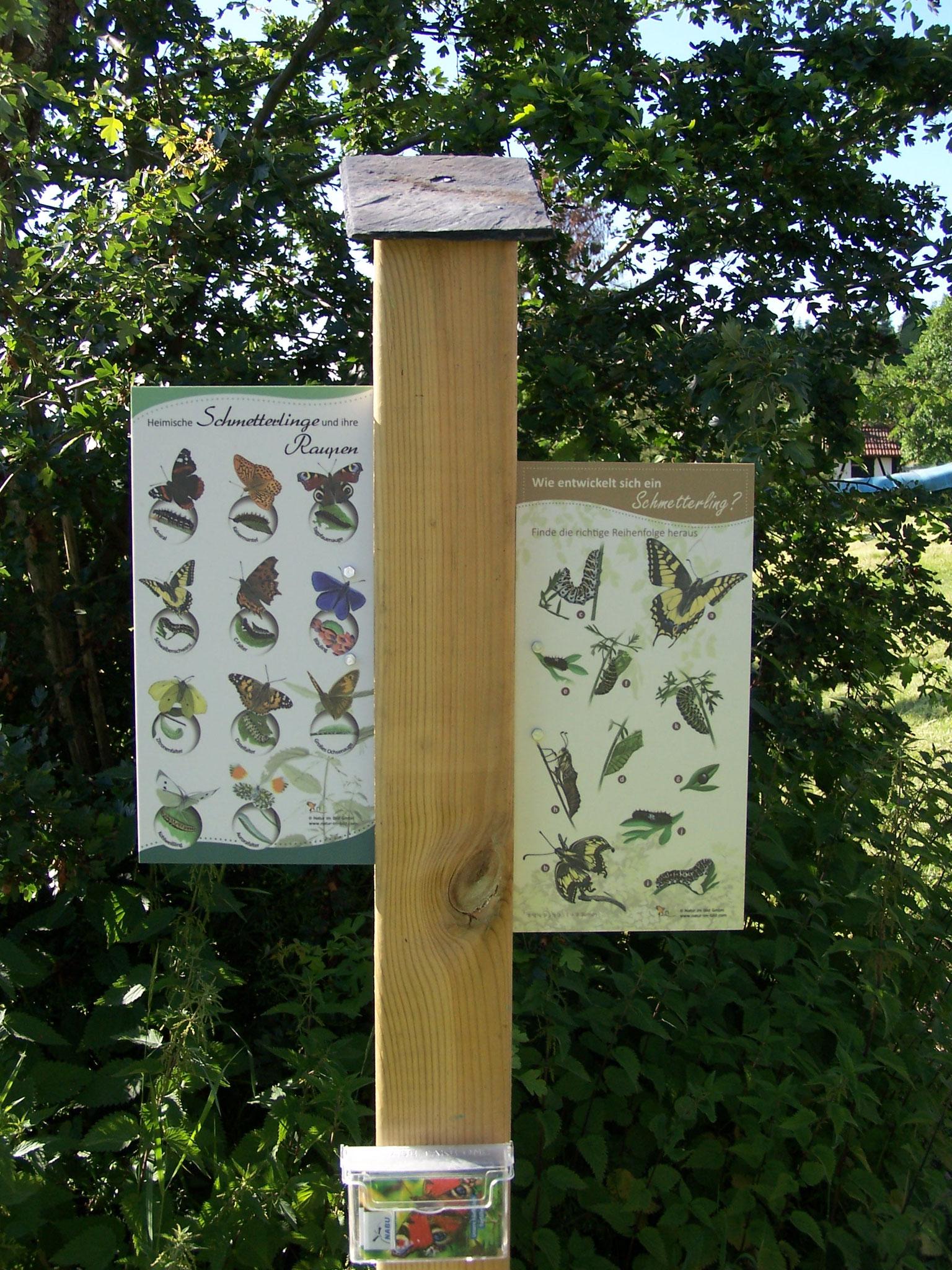 ... Schmetterlingsarten und die Entwicklung eines Schmetterlings....