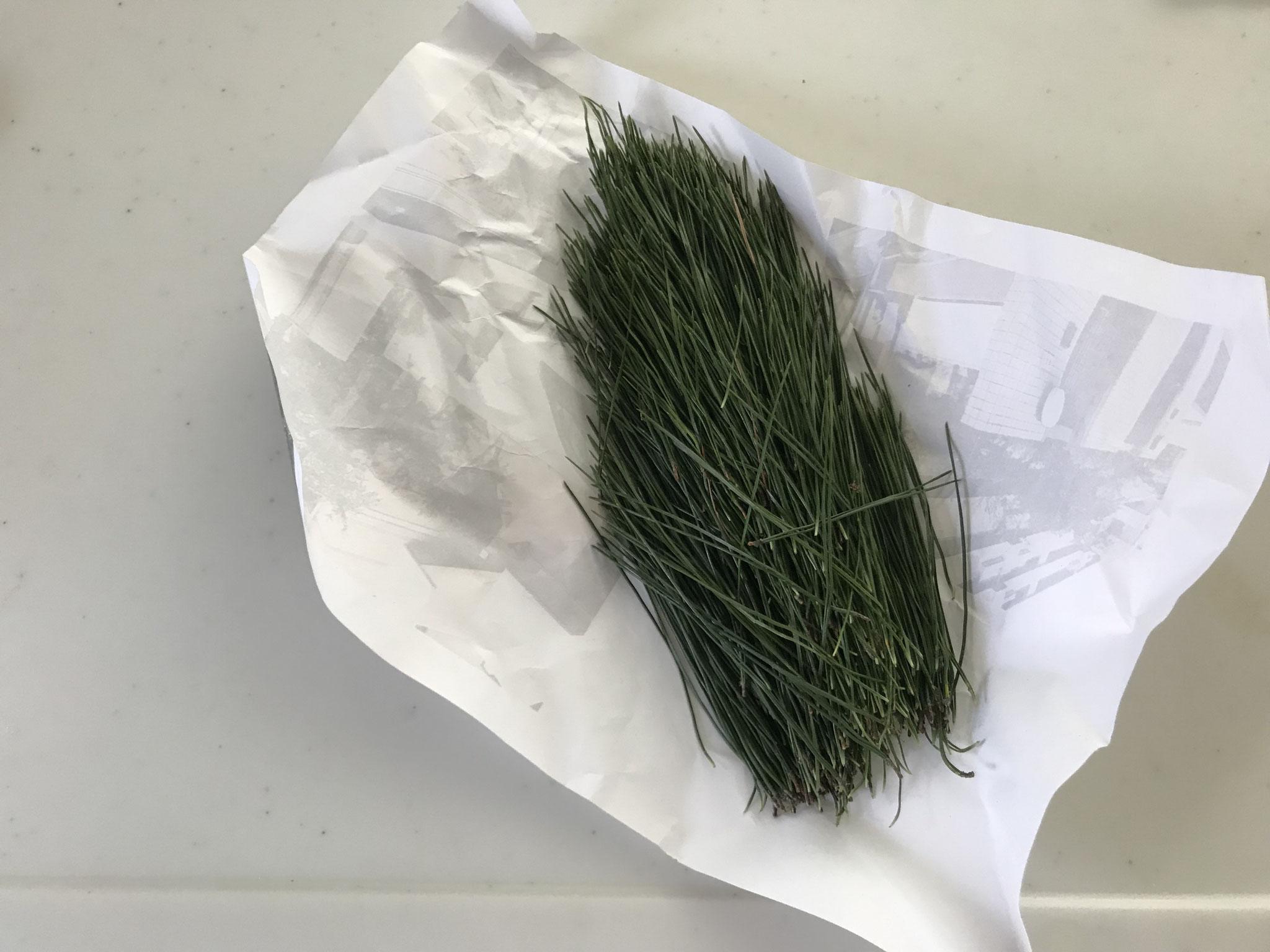 ①松の葉を洗う