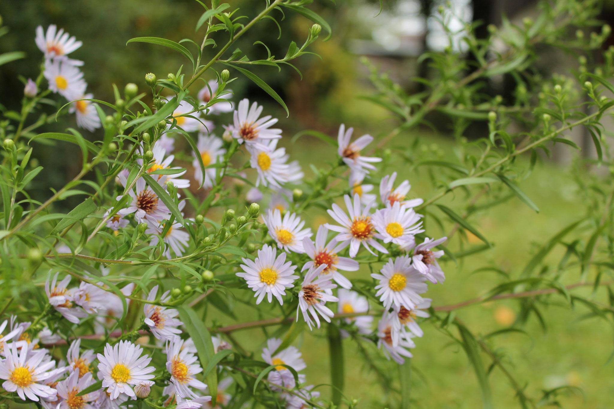 Sommer in unserem Garten