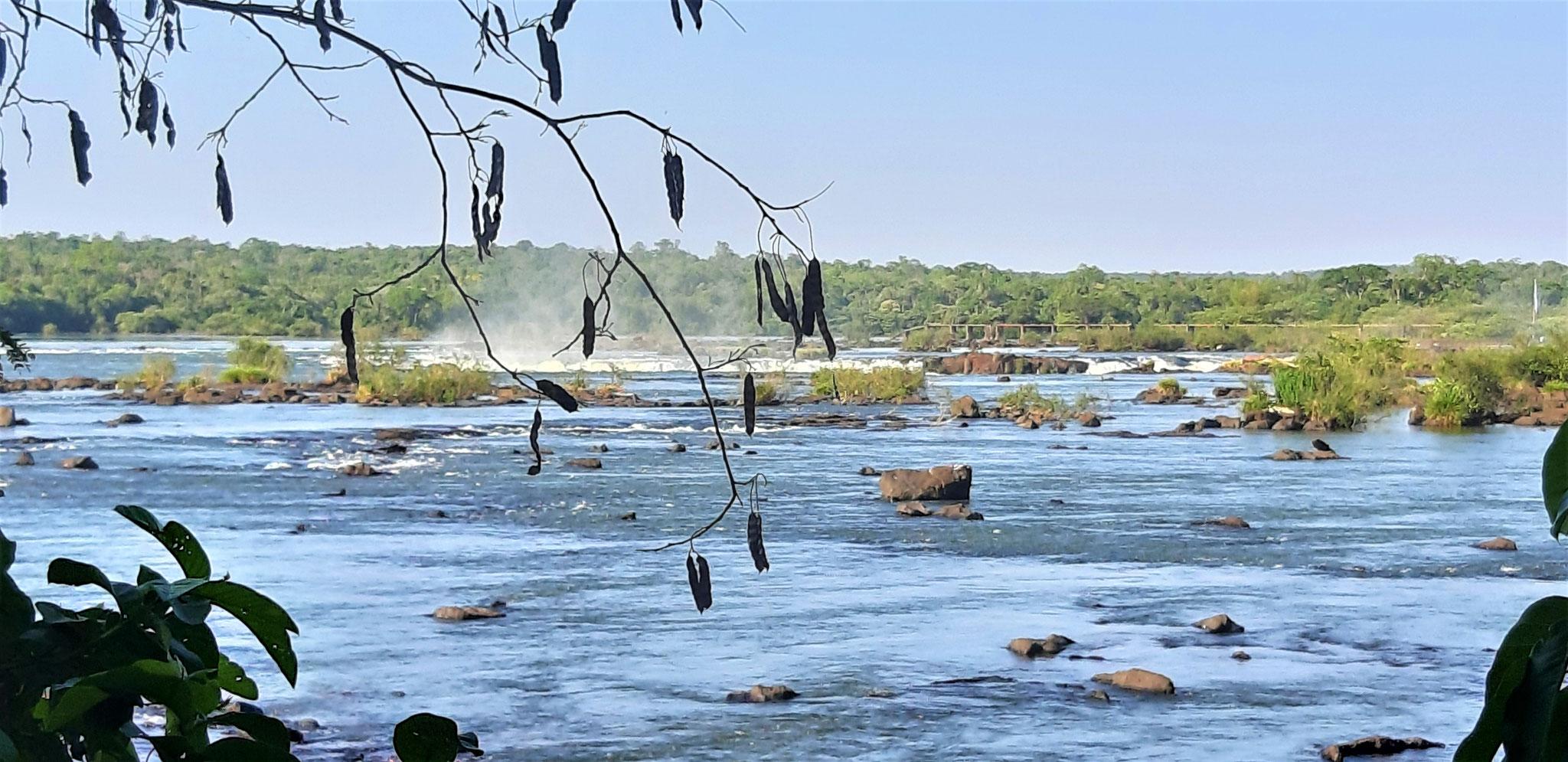 hier fließt der Iguazu noch still dahin