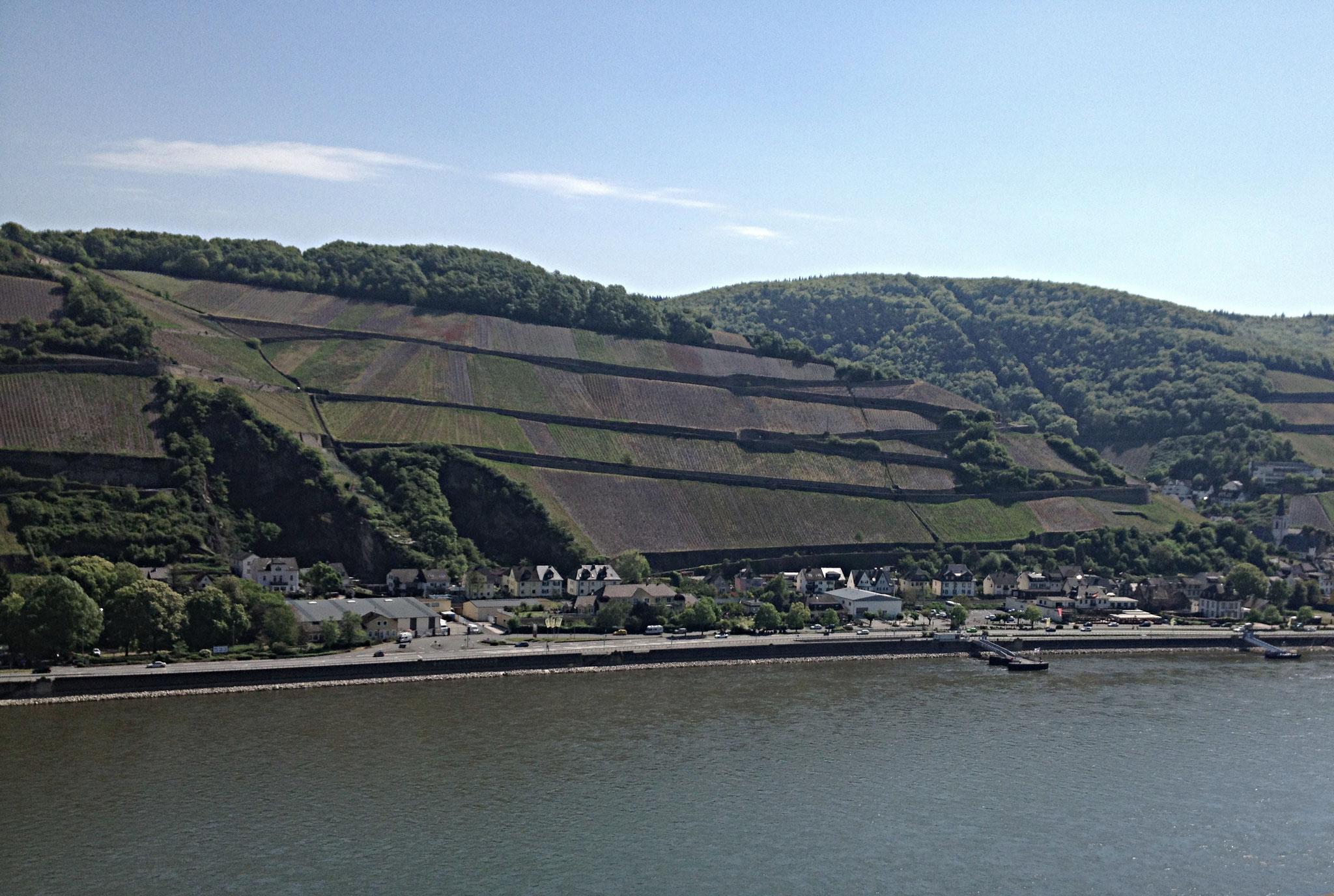 Weinbau am Rhein - eine steile Sache