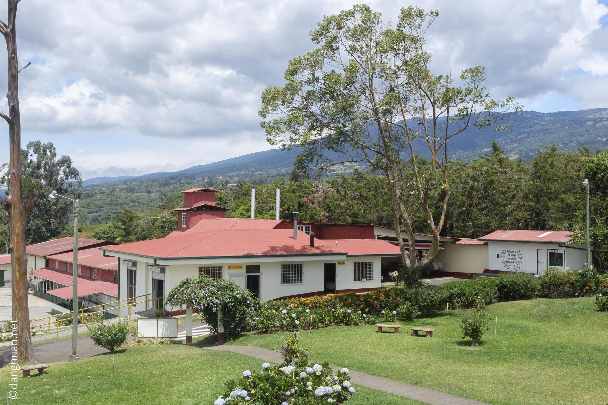 Plantation de café 'Doka Estate' dans la région d'Alujuel