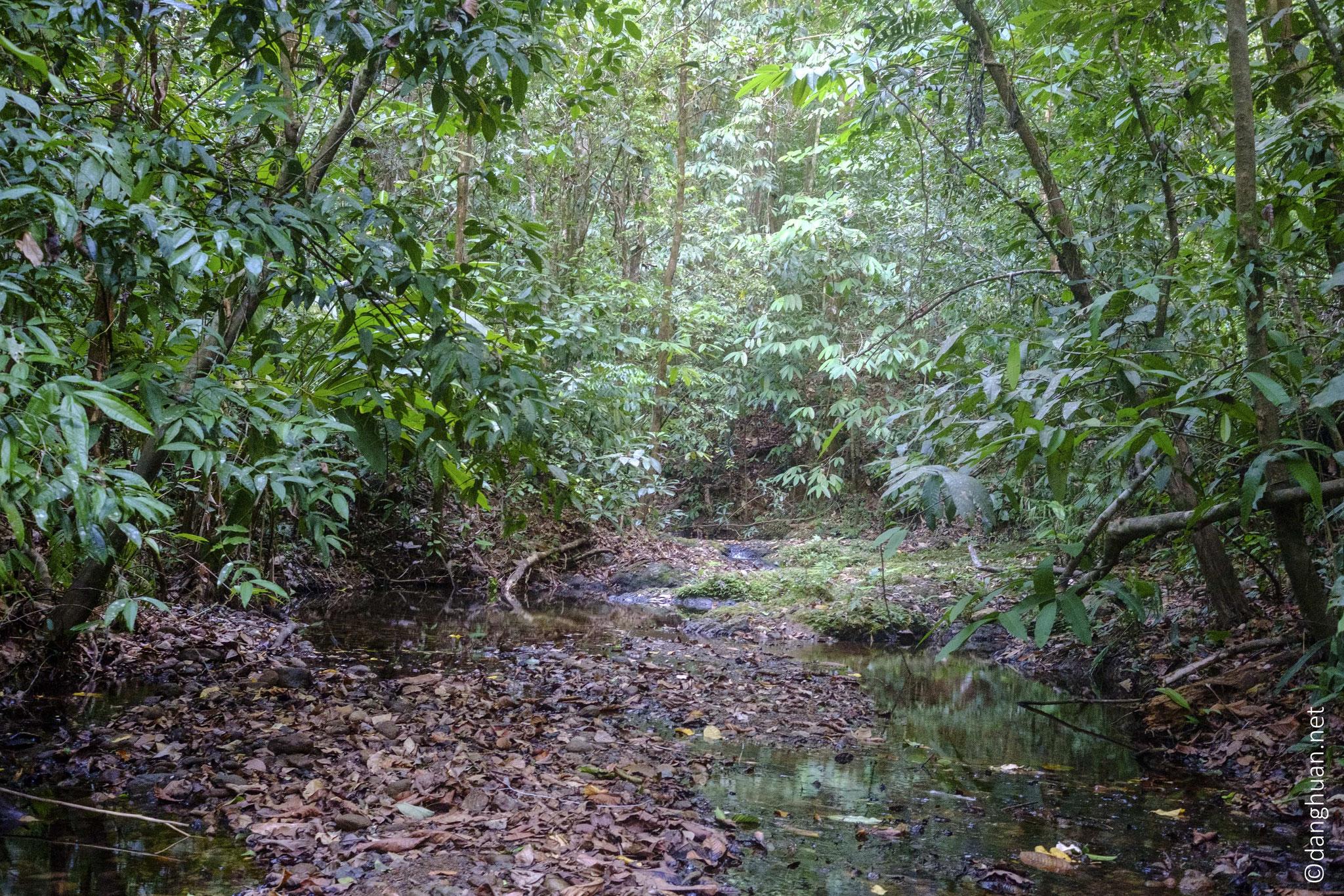 Considéré comme le joyau des réserves tropicales humides de Costa Rica
