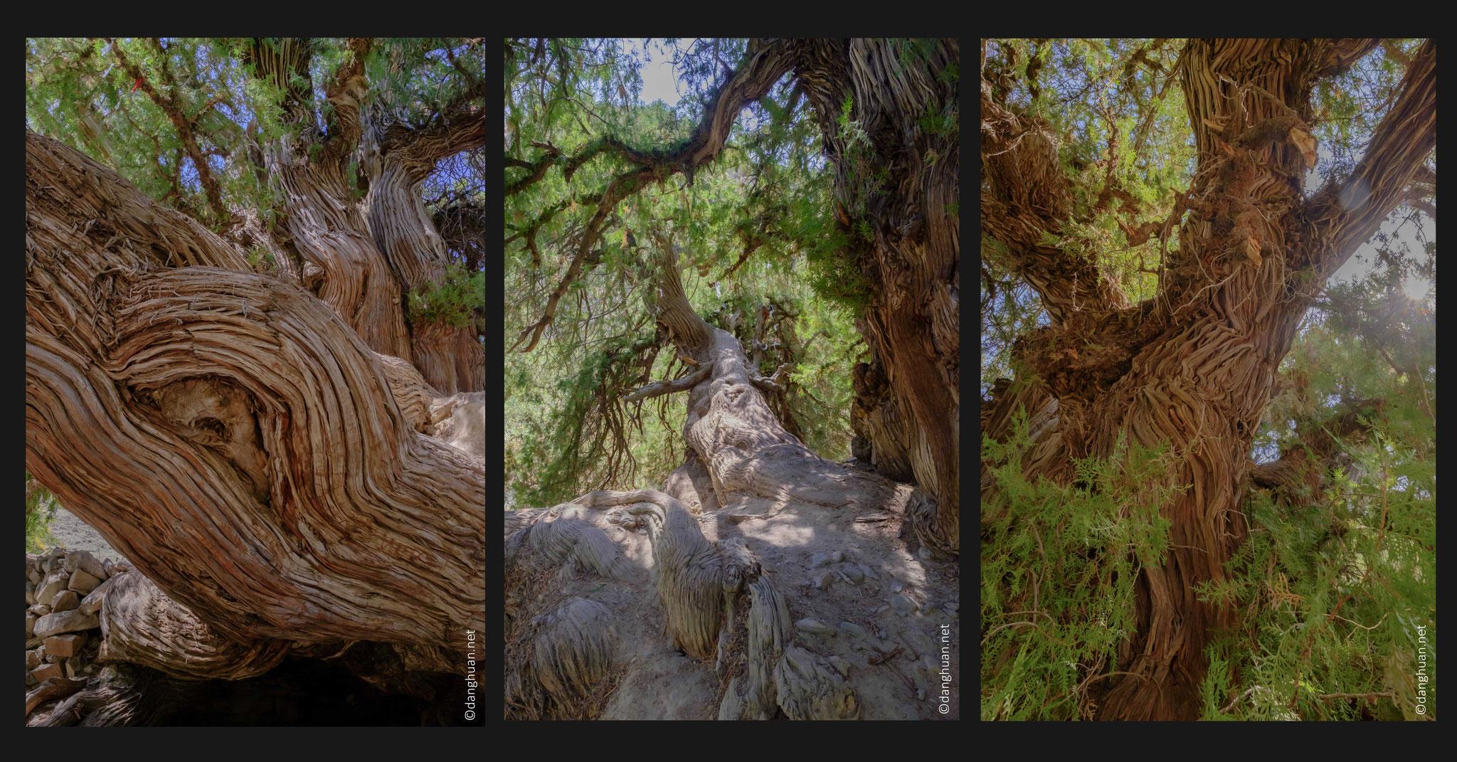 Selon la légende, l'arbre a été planté pour signaler la tombe d'un général d'Alexandre Le Grand