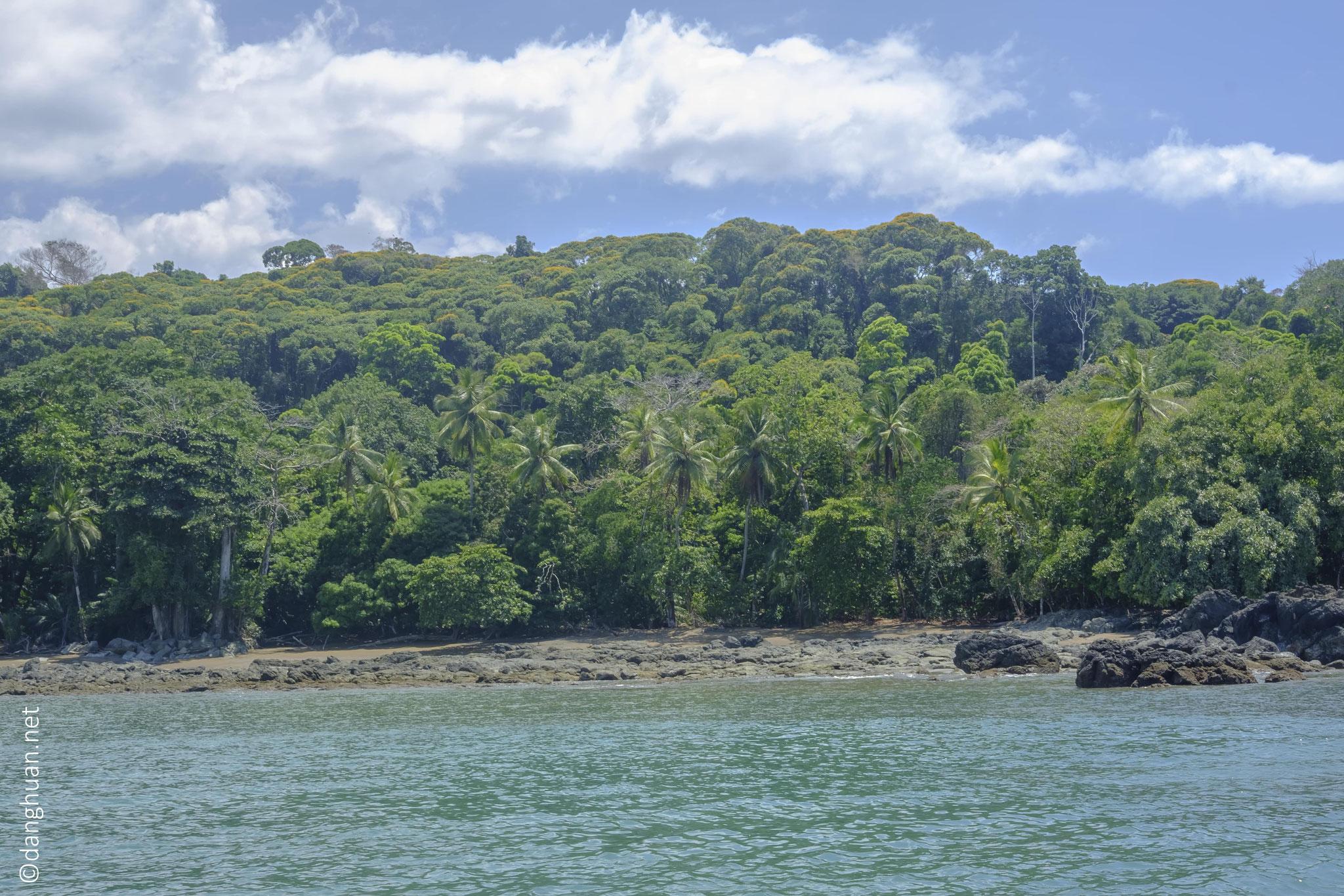Les forêts humides tropicales qui composent la péninsule d'Osa ...