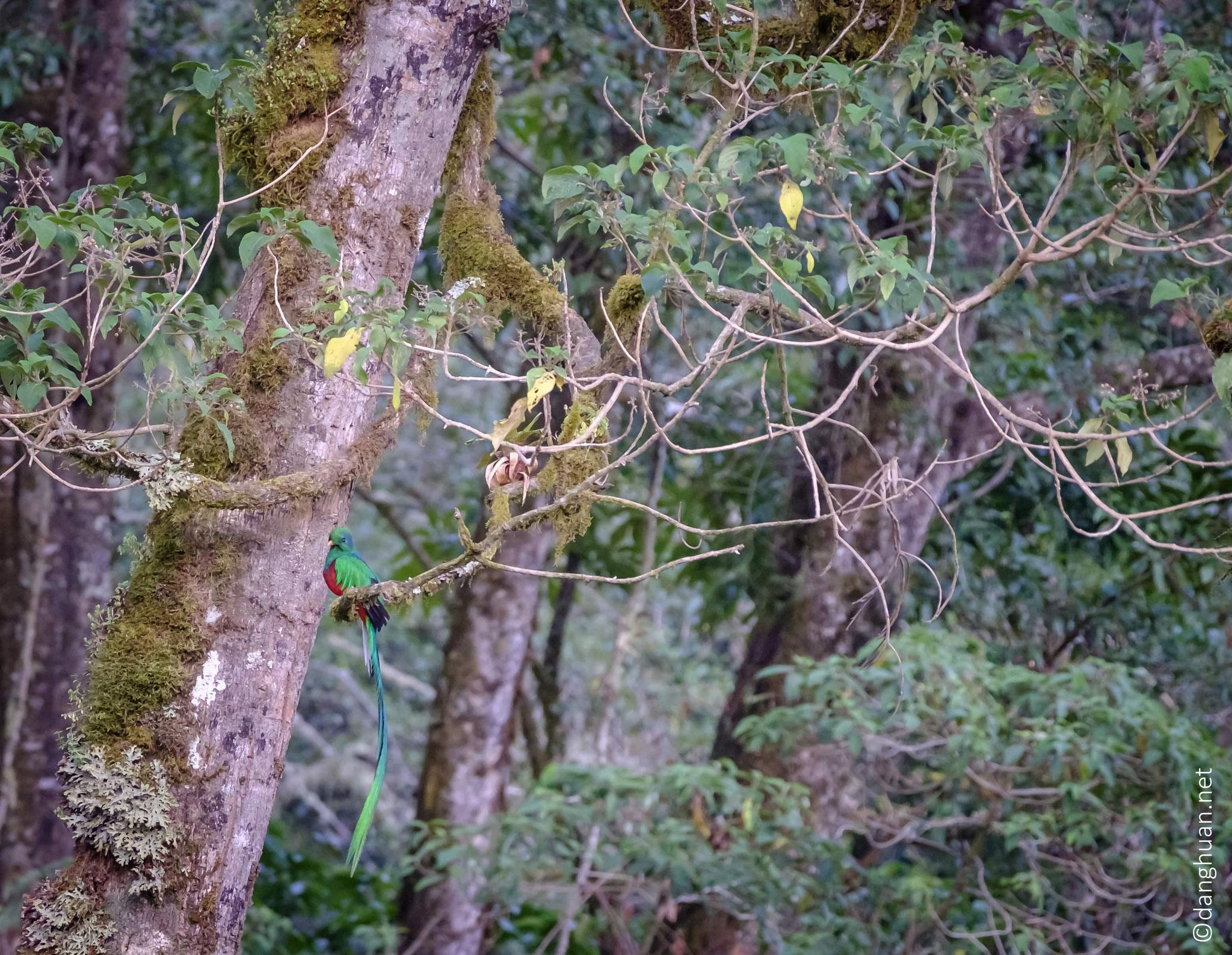Les cultures précolombiennes le vénérairent en tant qu'incarnation de Quetzalcoatl, le dieu de la végétation représenté sous la forme d'un serpent à plumes