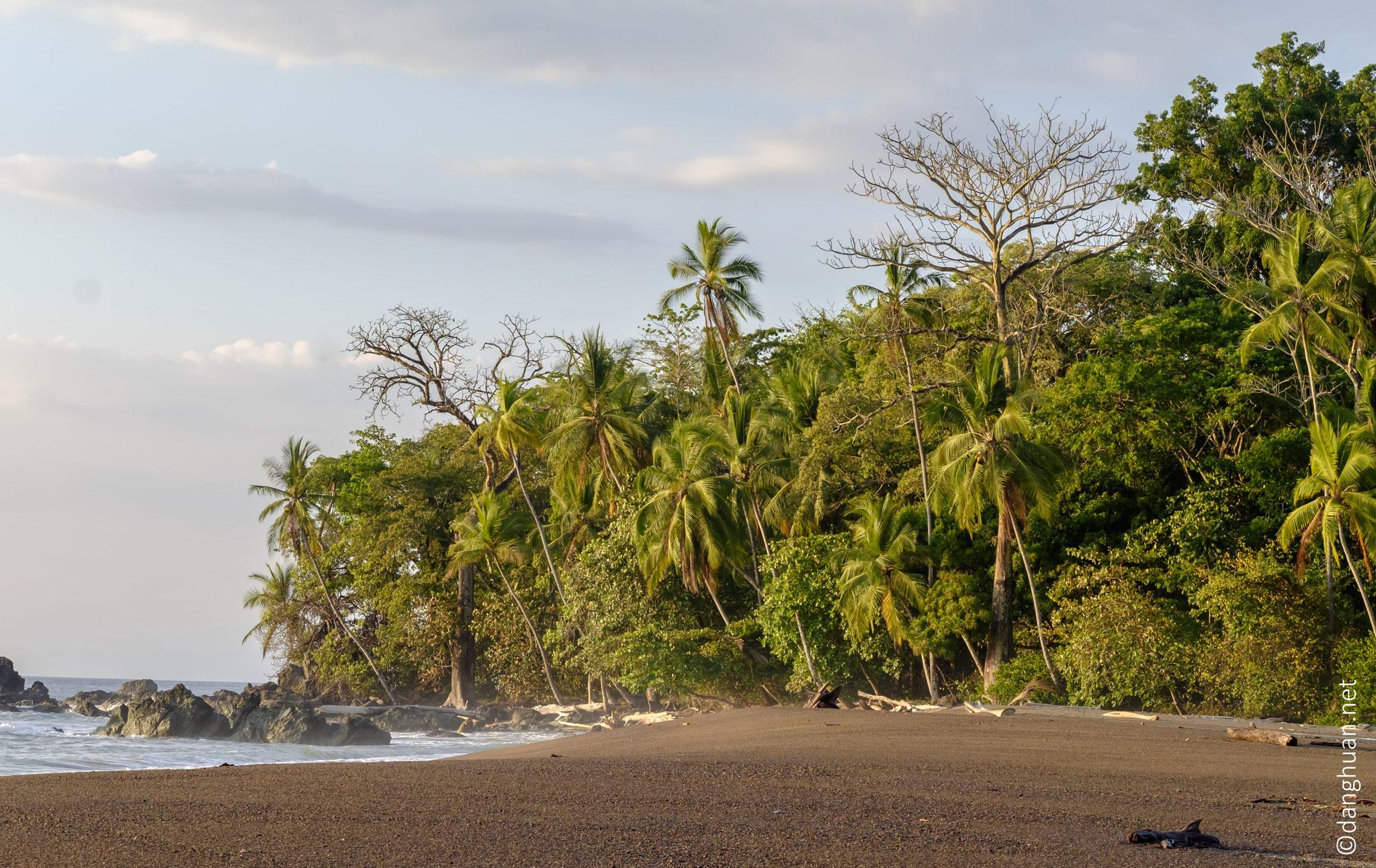 le long de la côte dans la fôret du littoral de la pénisule d'Osa