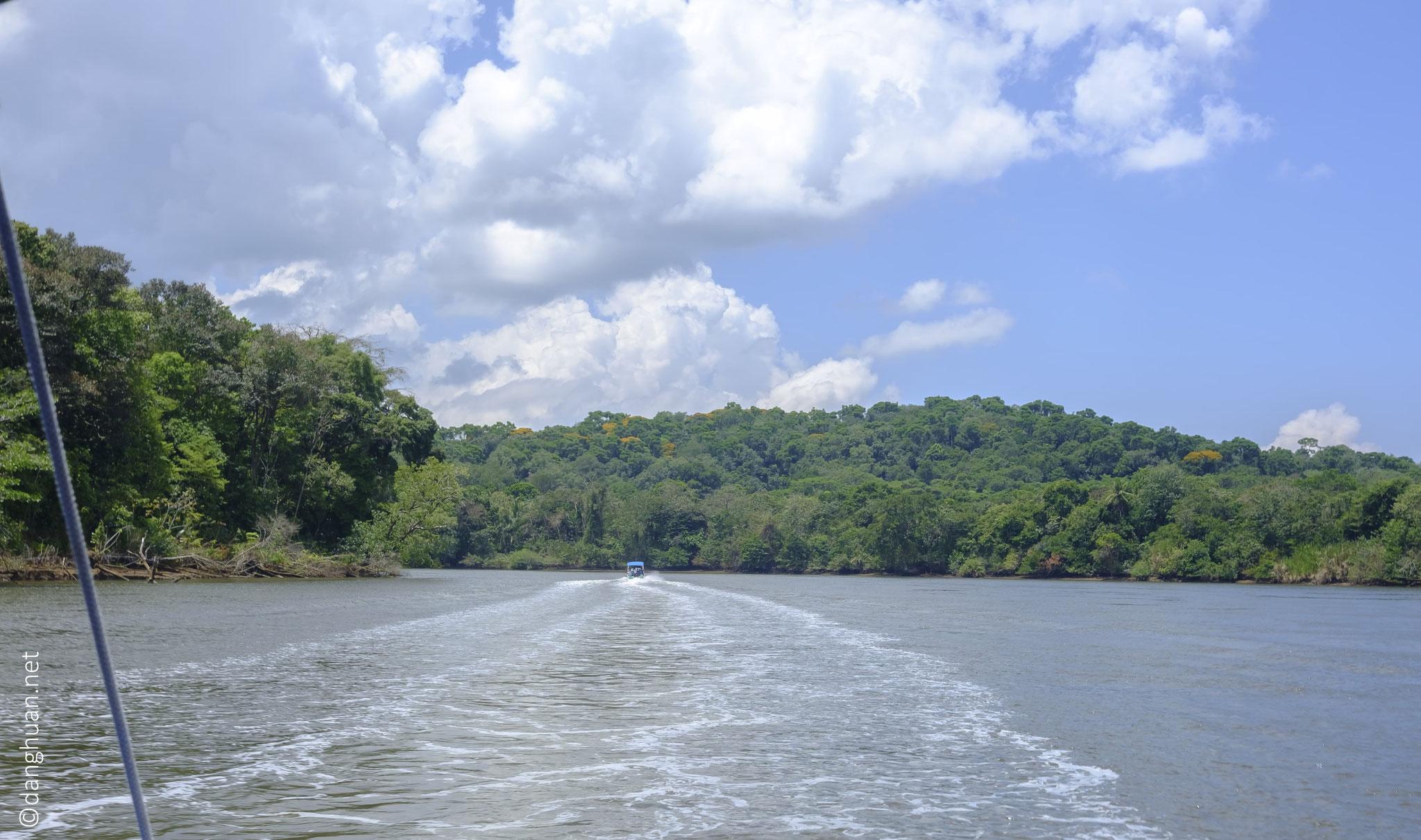 Parc national Palo Verde - balade d'observation de la mangrove, de la flaune et de la flore... sur la rivière Sierpe