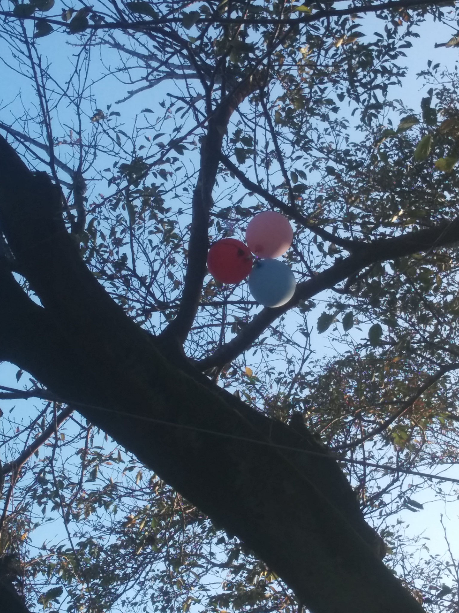 9 My hostbro lost these balloons (he doesn't know about helium)
