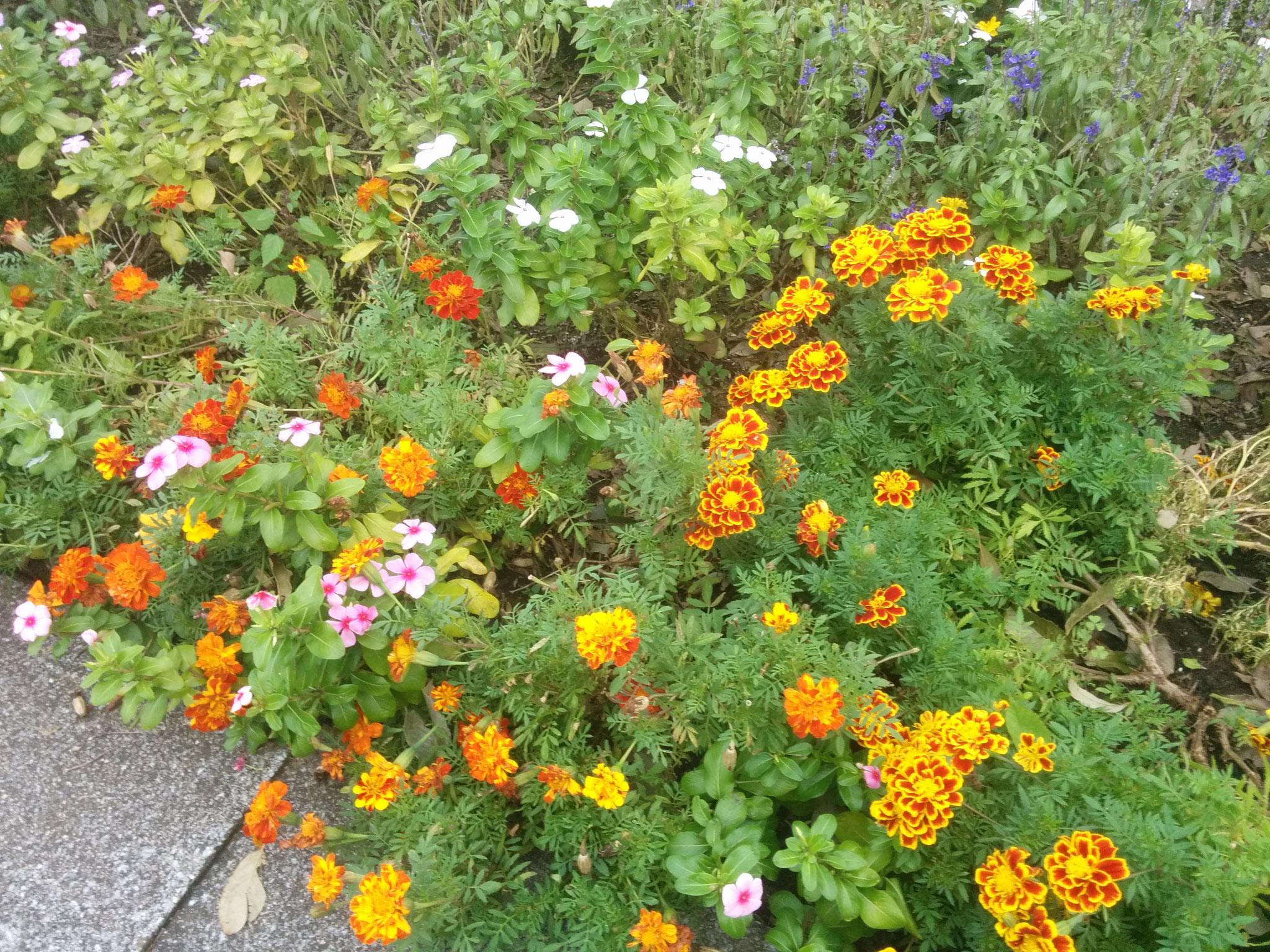 12 flowers :3