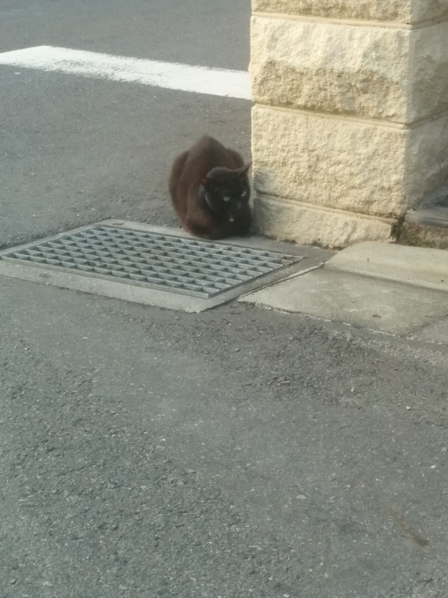 very tough cat, that didn't like the hostdog :( He couldn't see the cat, though ^^