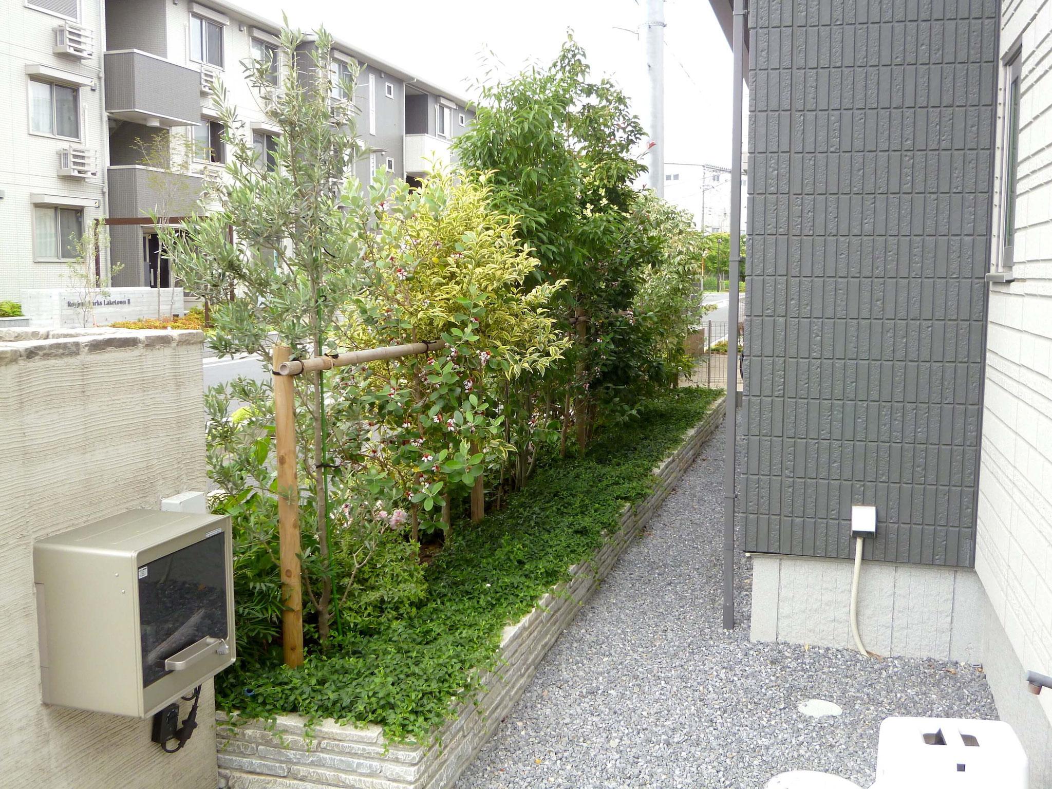 越谷市レイクタウン 外構工事・植栽工事写真3