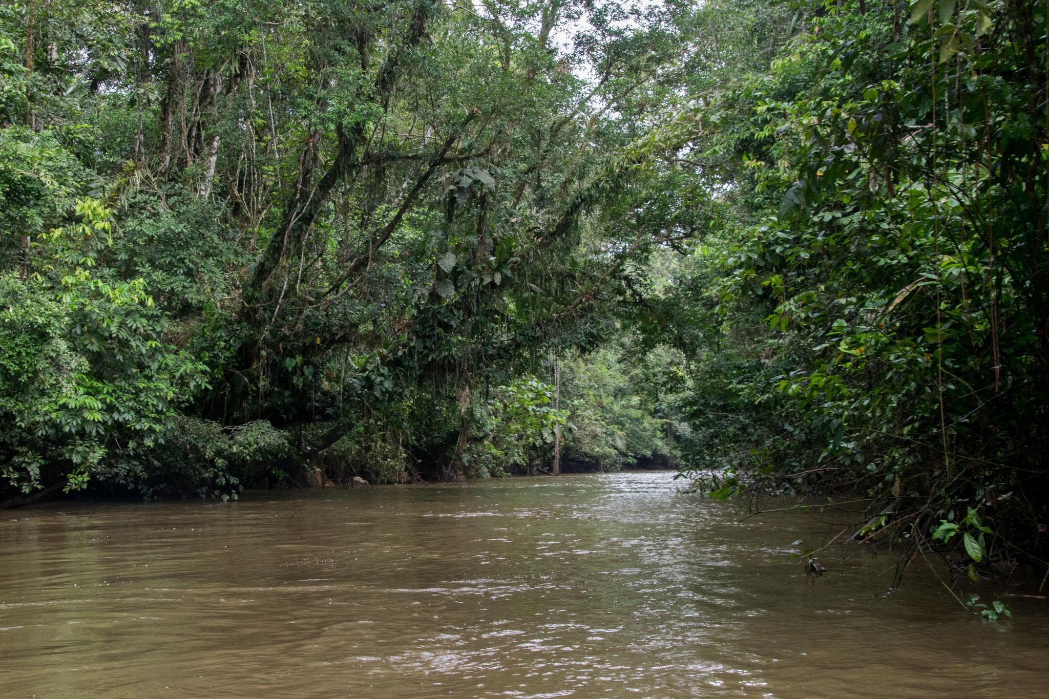 Die Strassen des Regenwalds