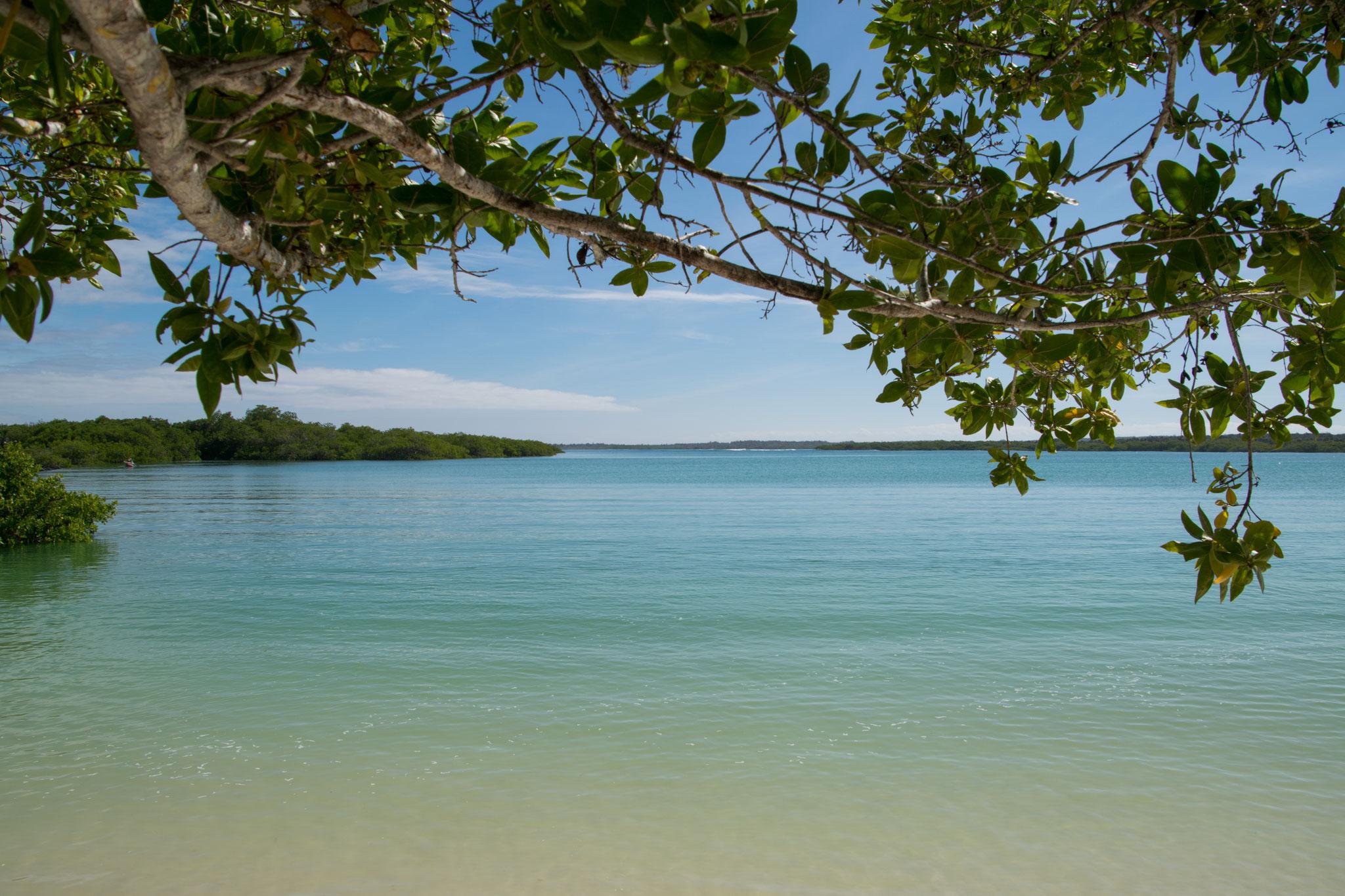 Unser erster Badestrand - Tortuga Bay