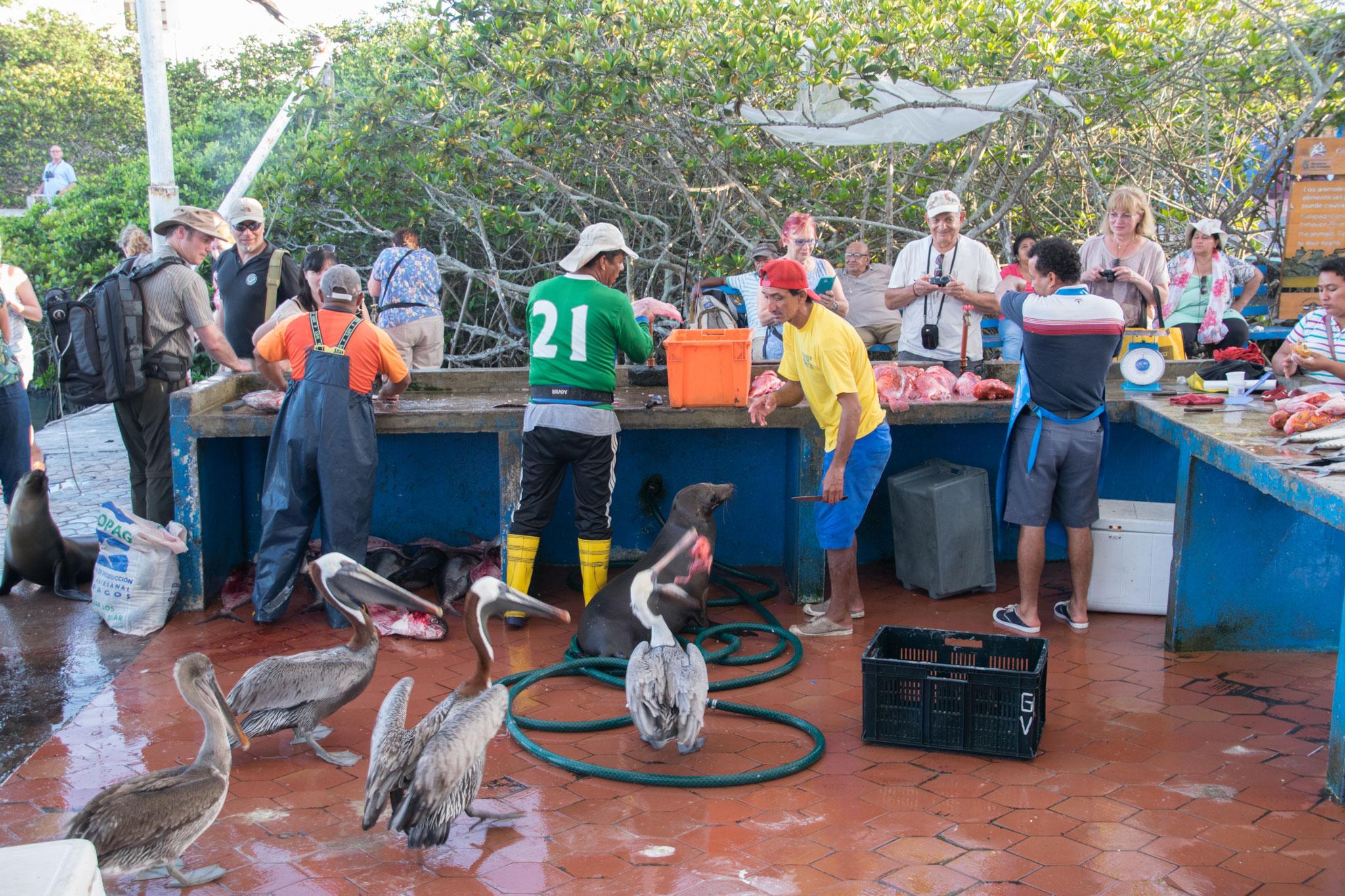 Fischmarkt in Puerto Ayora