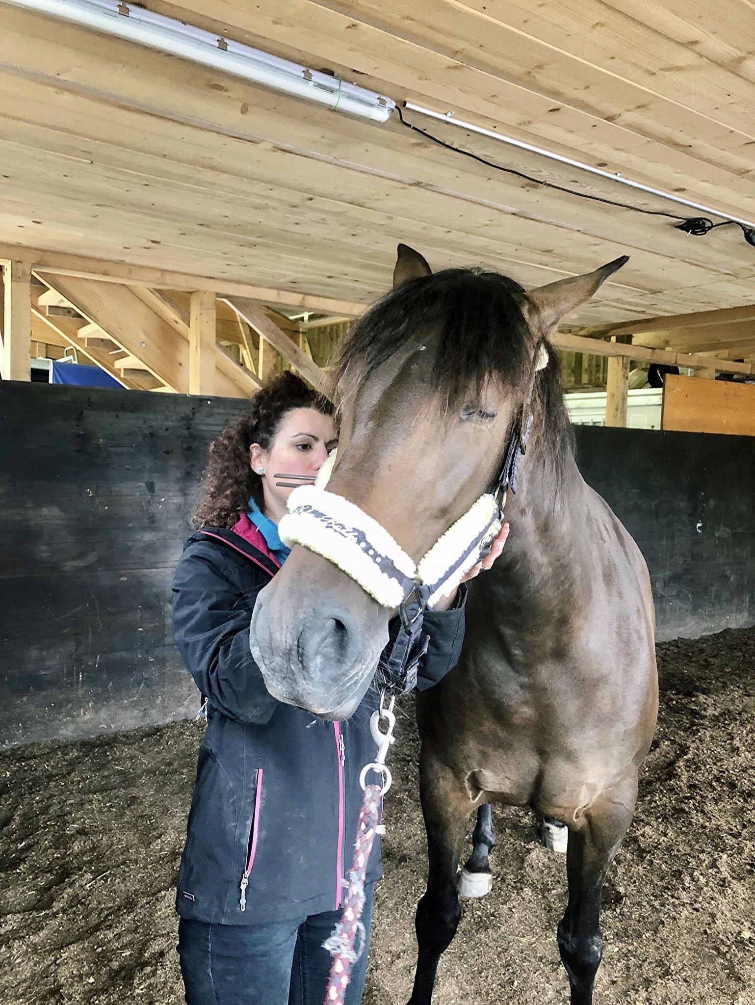 Das sanfte Vibrieren löst u.a. Verspannungen und wird von den meisten Pferden als sehr angenehm empfunden.