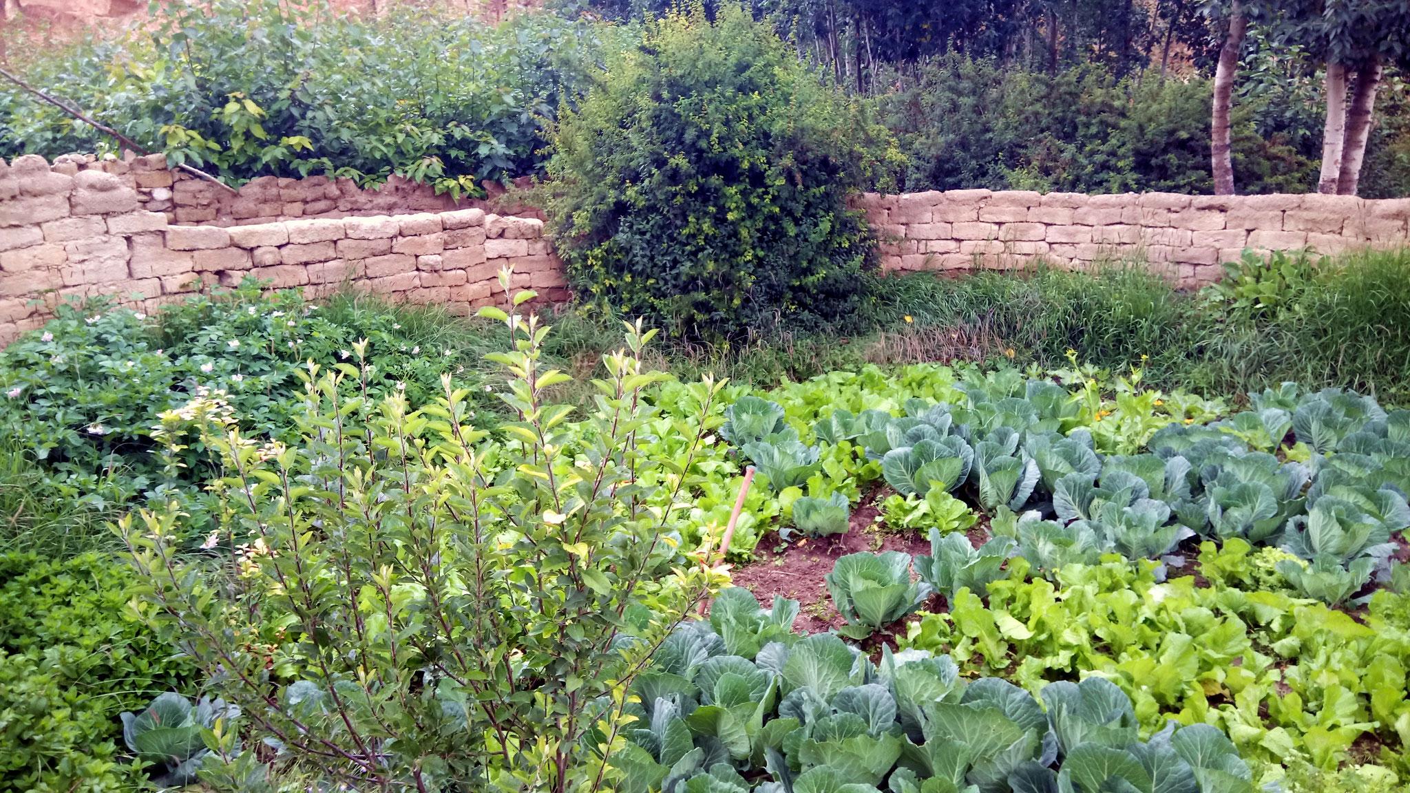 les jardins potagers ...