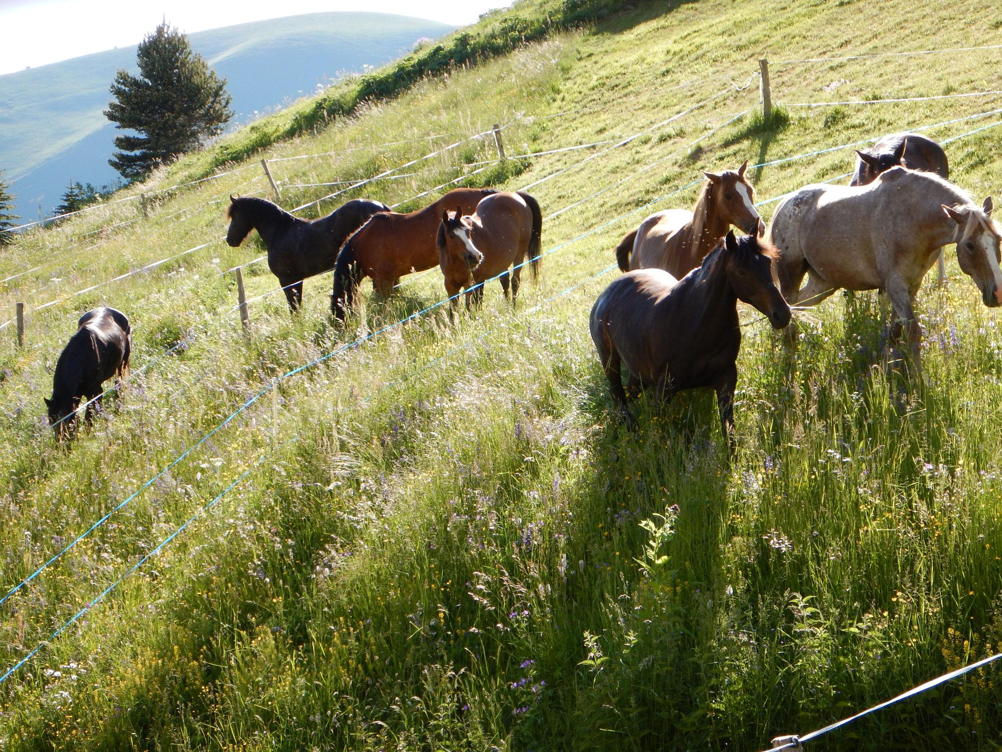 Les chevaux aux paddocks de Notre Dame de la Salette