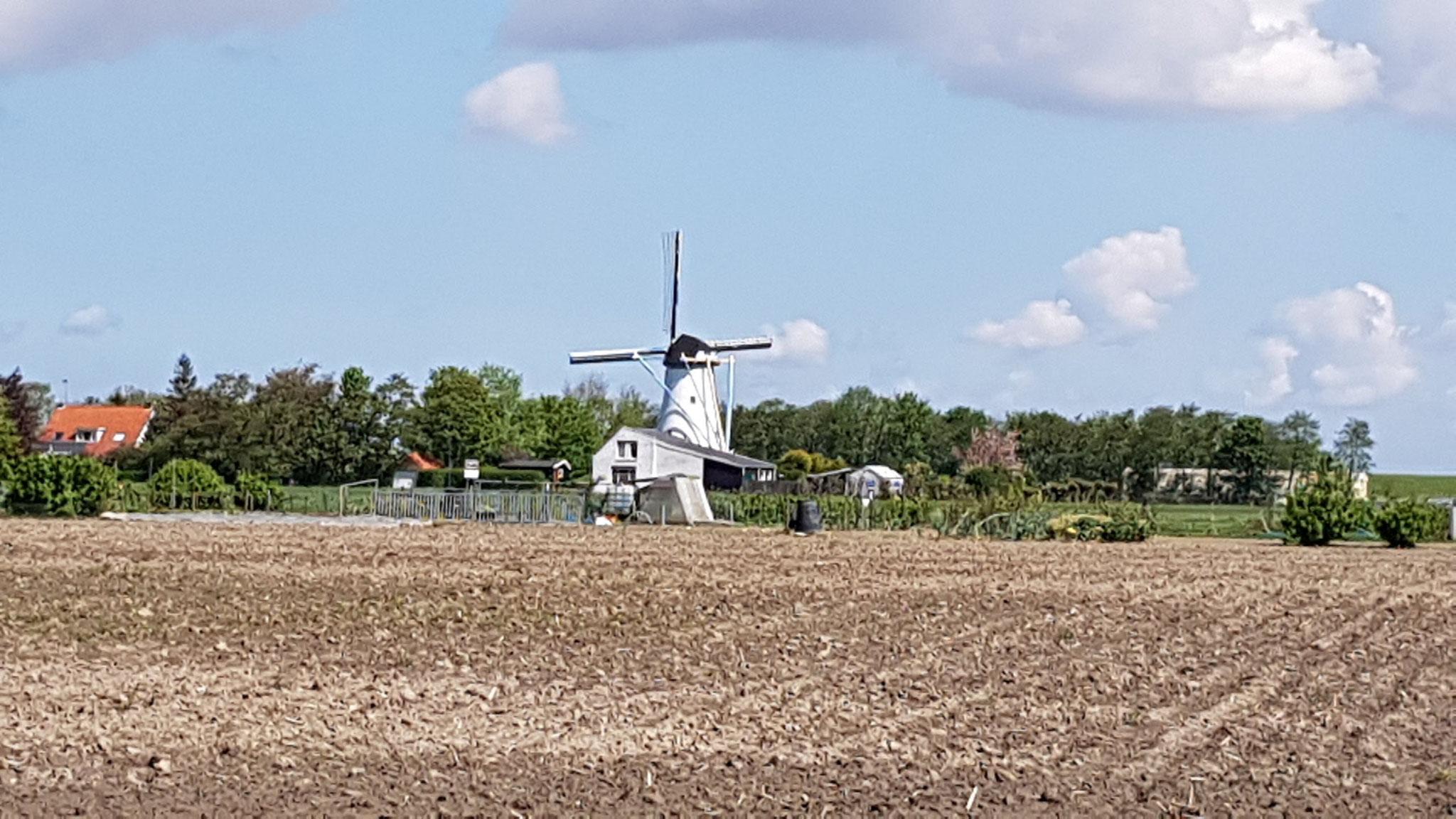 Mühle bei Colijnsplaat