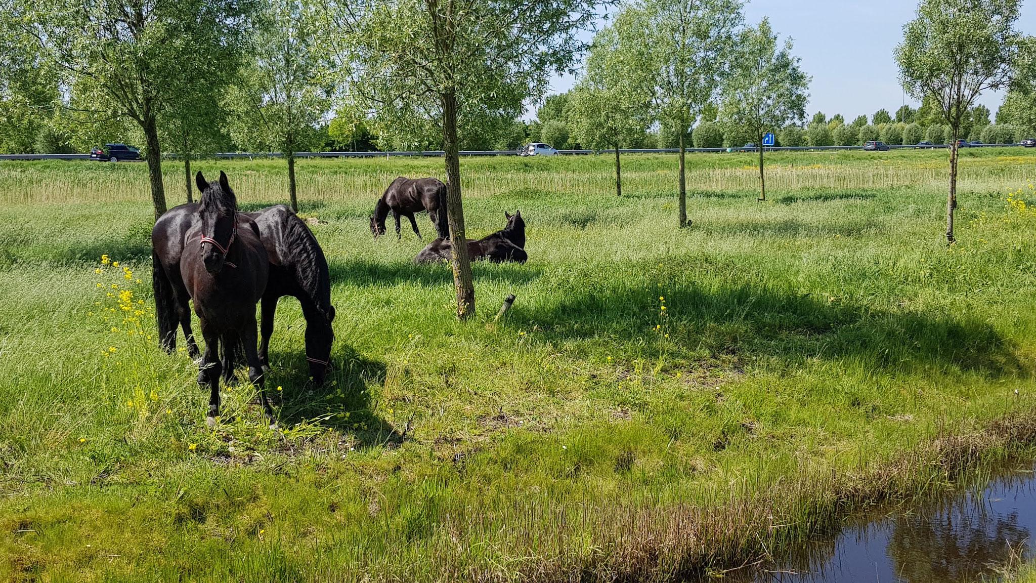 kurz vor Middelburg